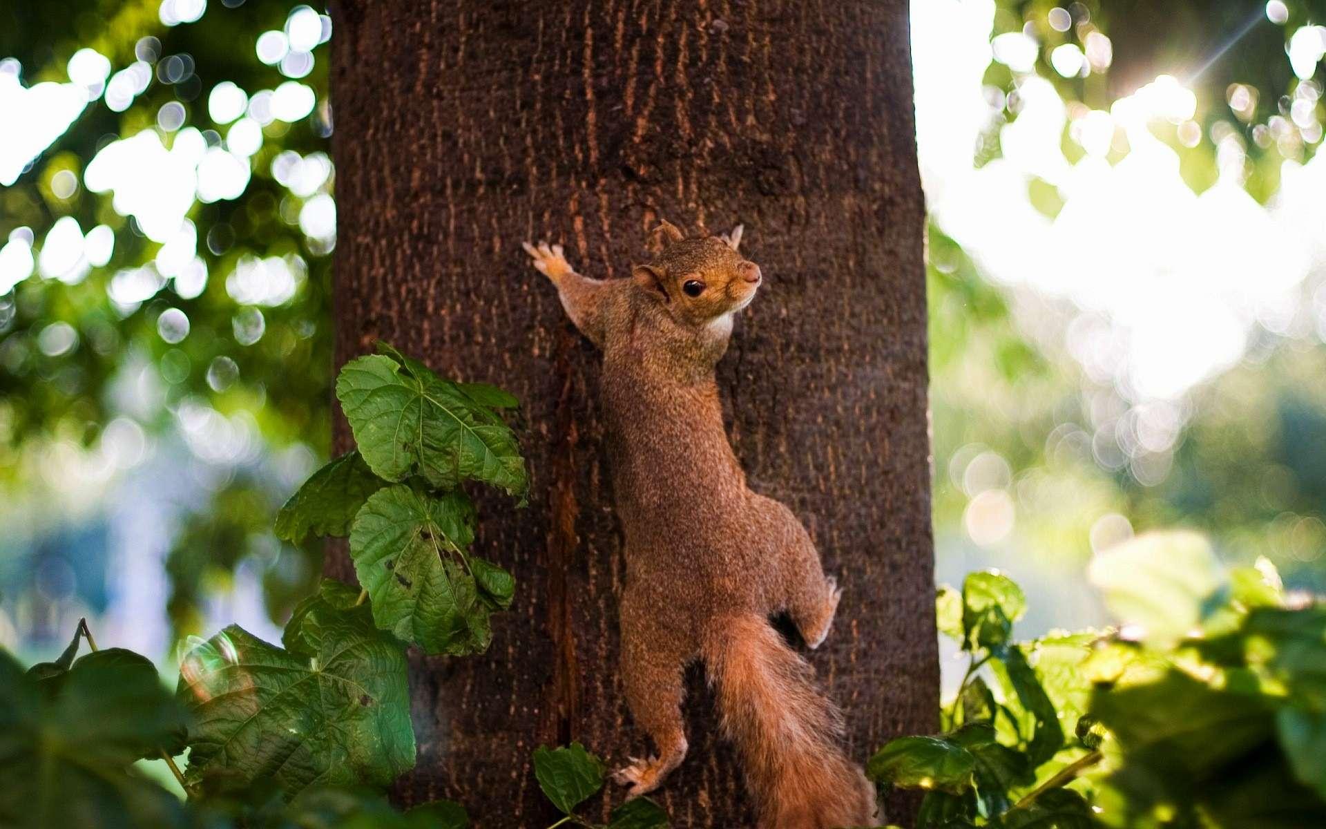 Белка на высохшем дереве без смс