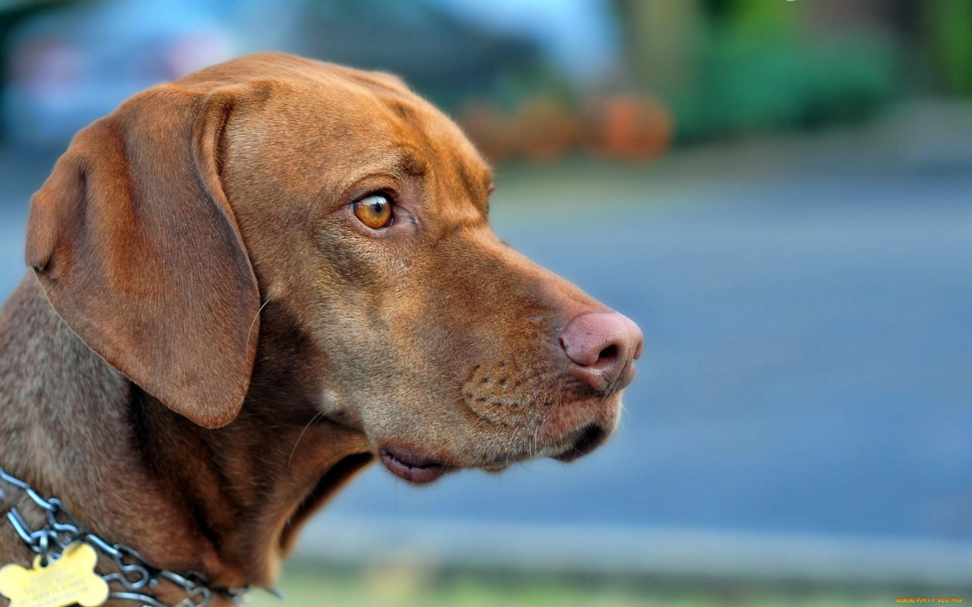 собака опасный взгляд морда загрузить