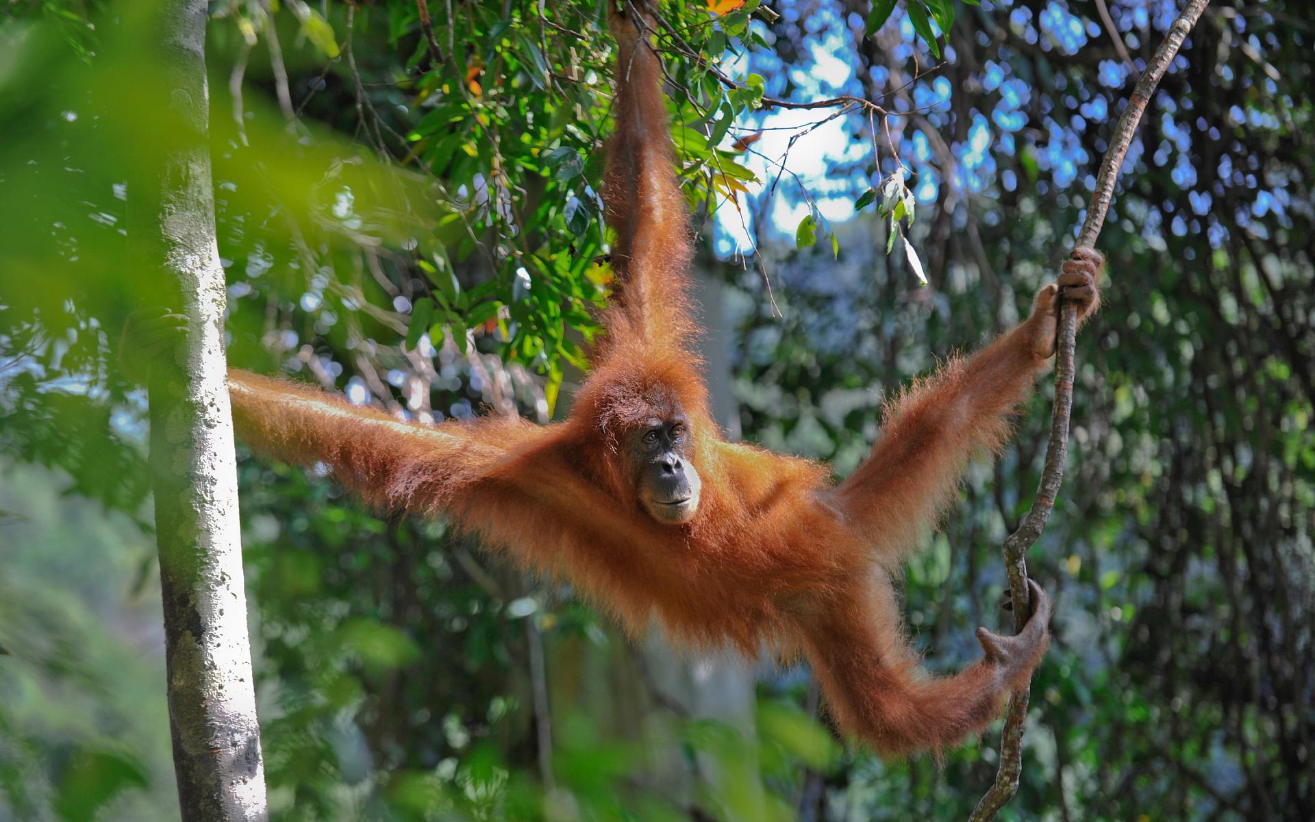 обезьянки в джунглях картинка игорь