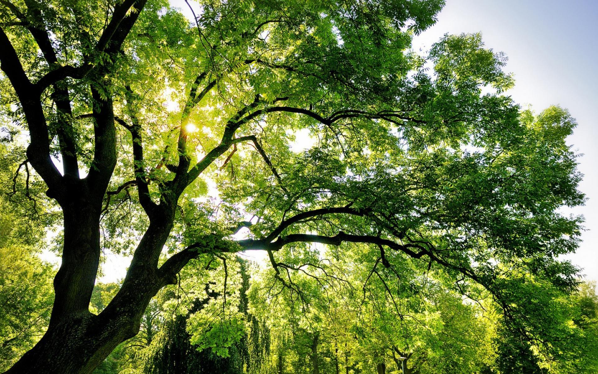 деревья небо солнце скачать