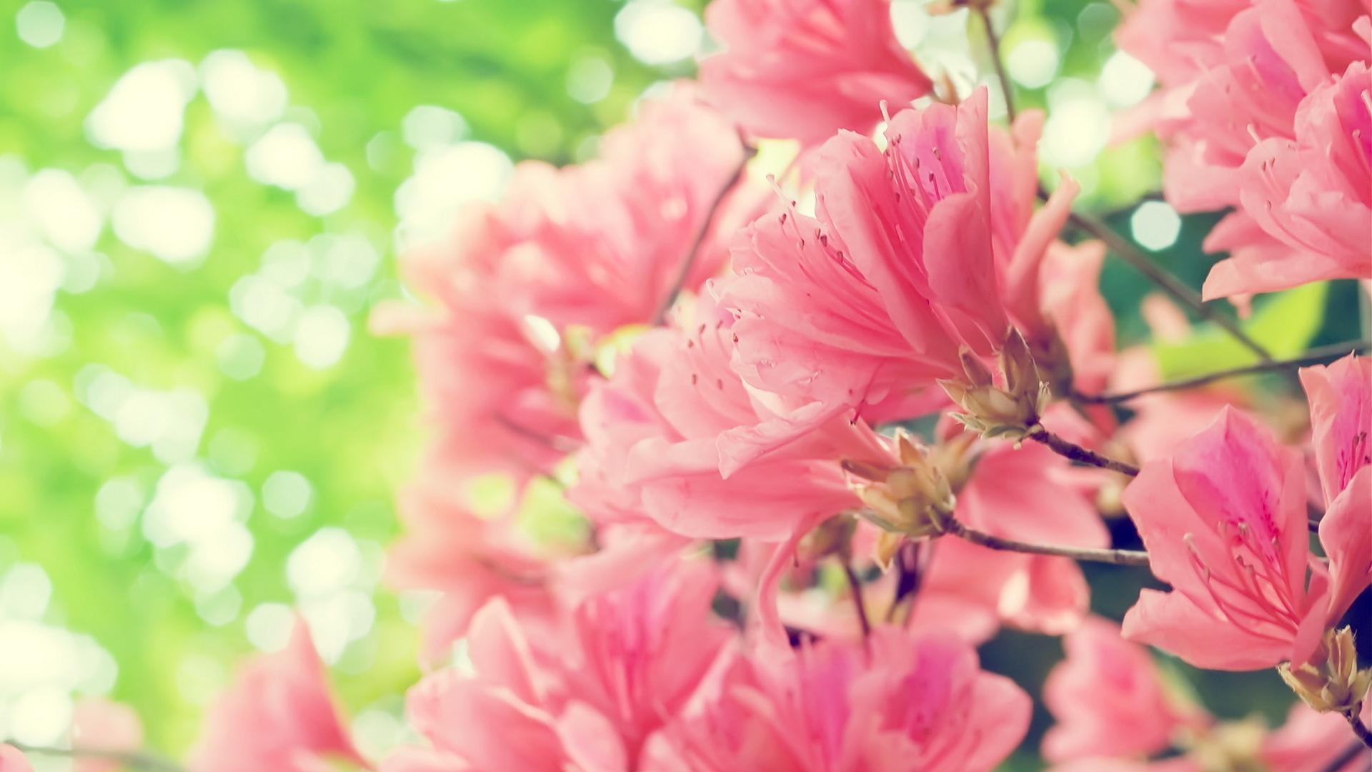 GlissadeМолодая розові заставки на телефон при носке