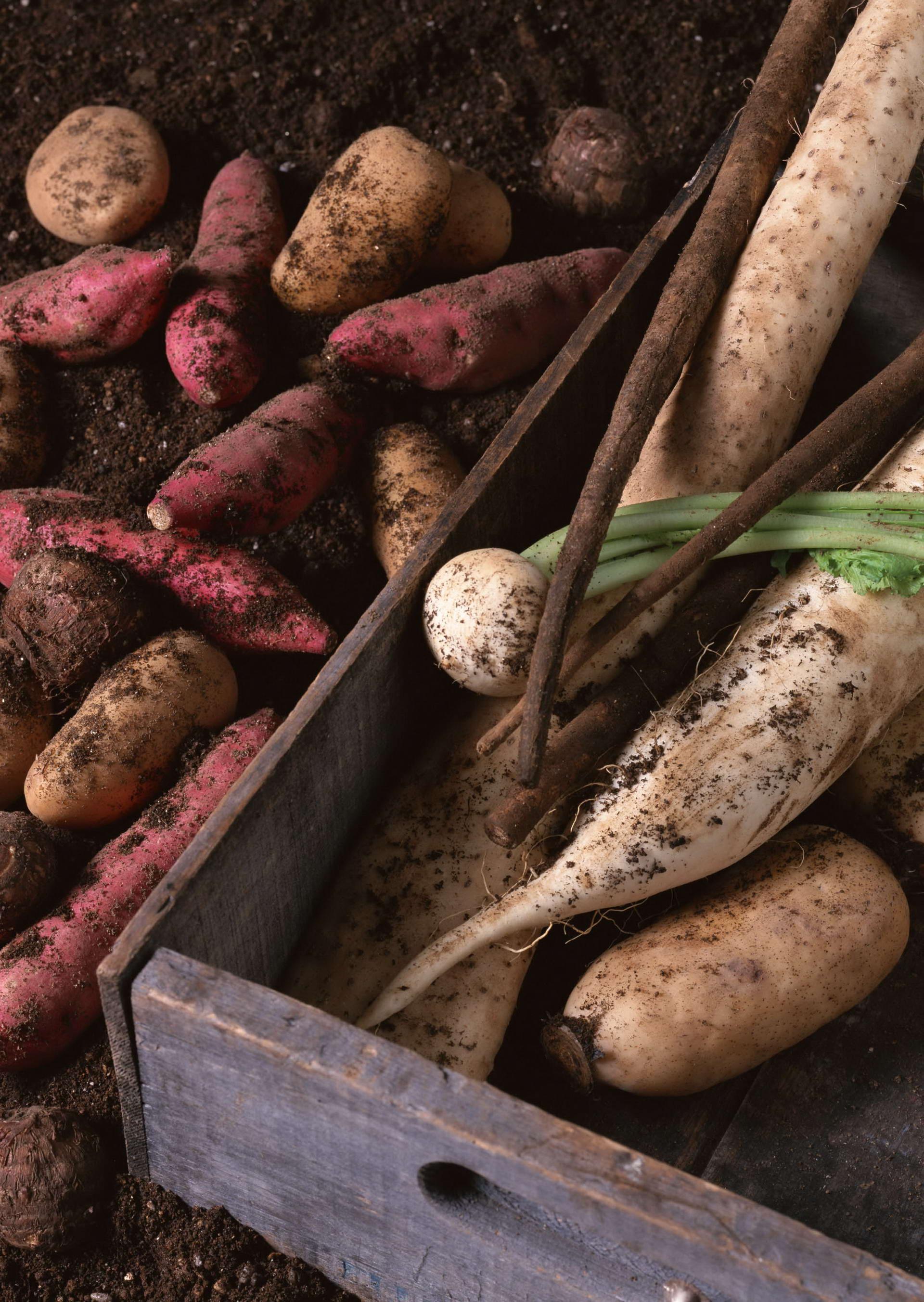 edible tubers vegetables - HD1920×2705