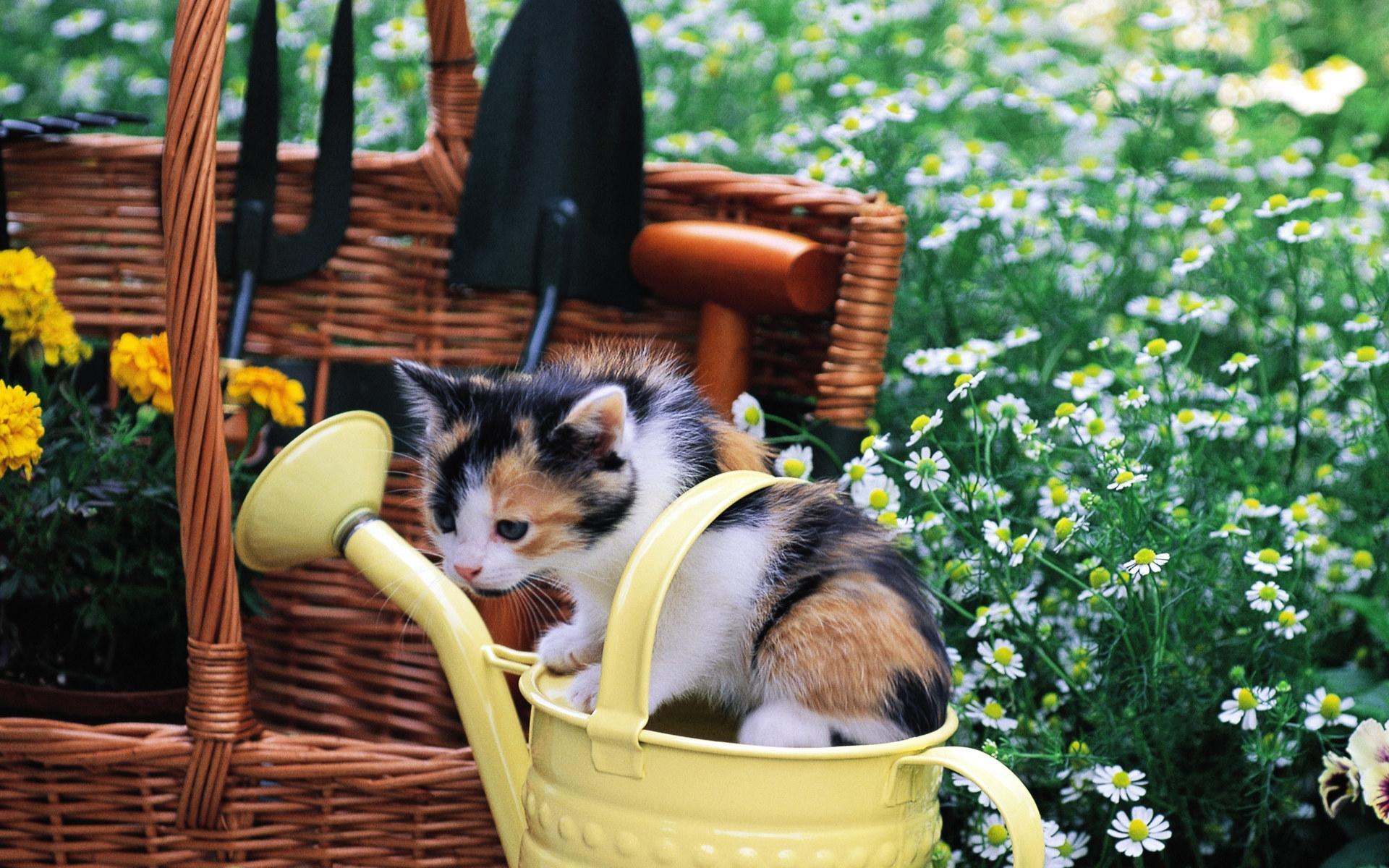 котенок возле корзины  № 117583 без смс
