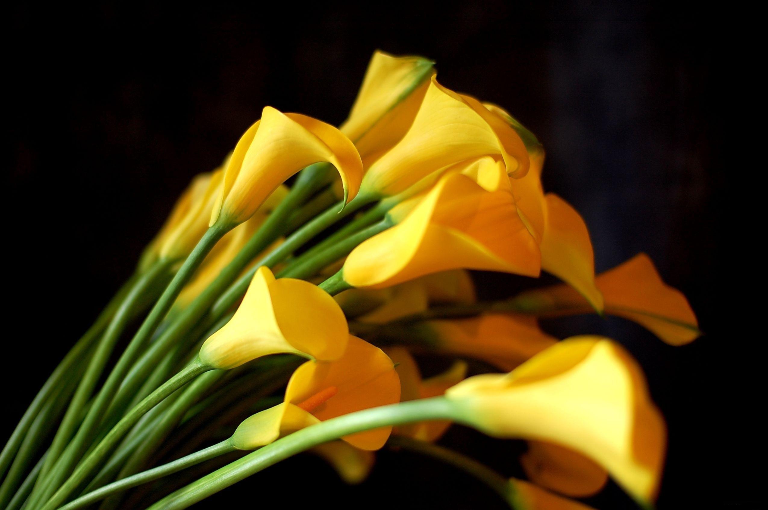 цветы фото траур желтые фотоэкспонометр индивидуальным номером
