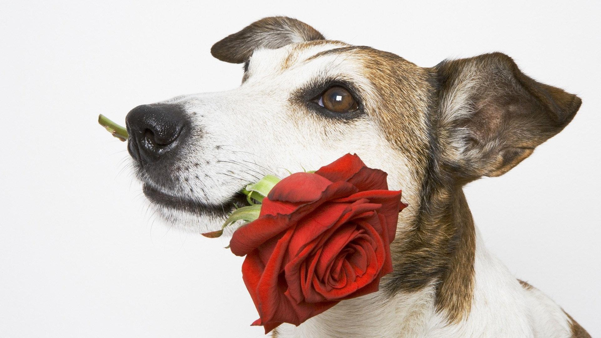 Надписями, открытки музыкальные собаки