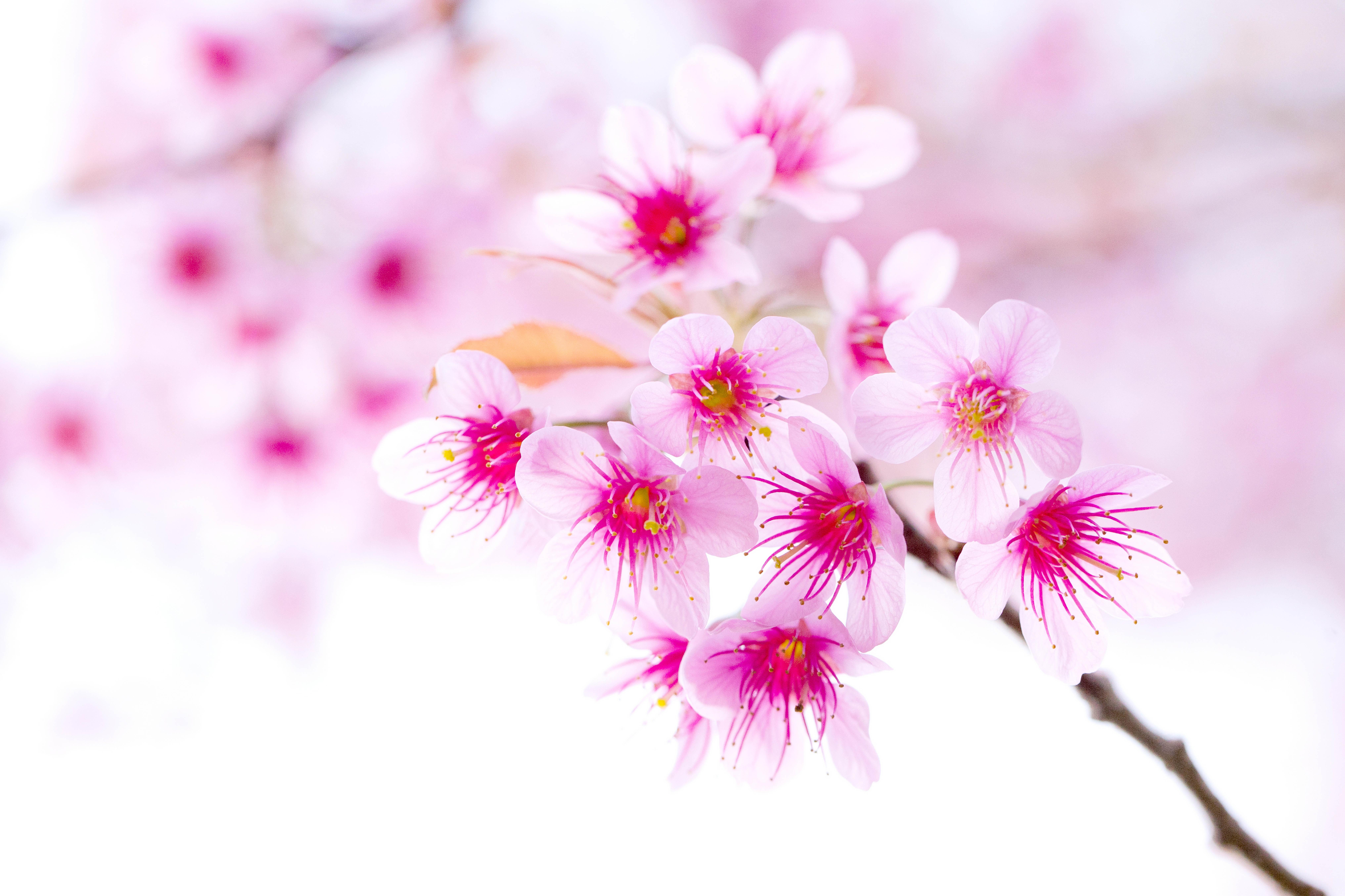нежные цветочки на ветке  № 1333910 без смс