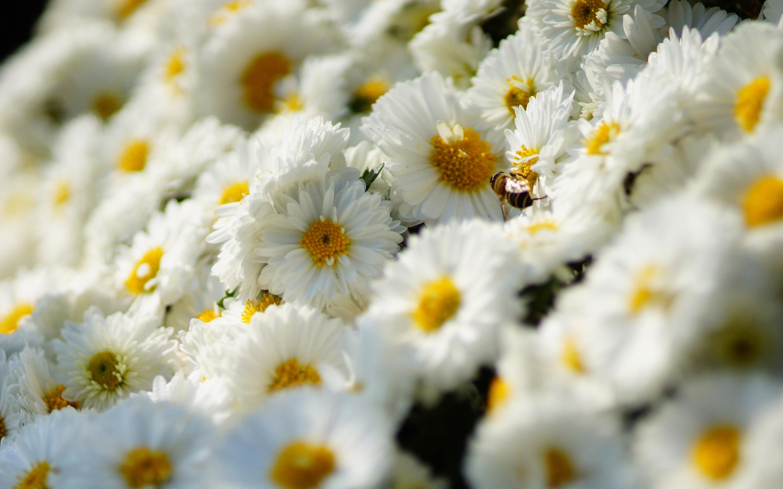 Качественные обои цветы для рабочего стола