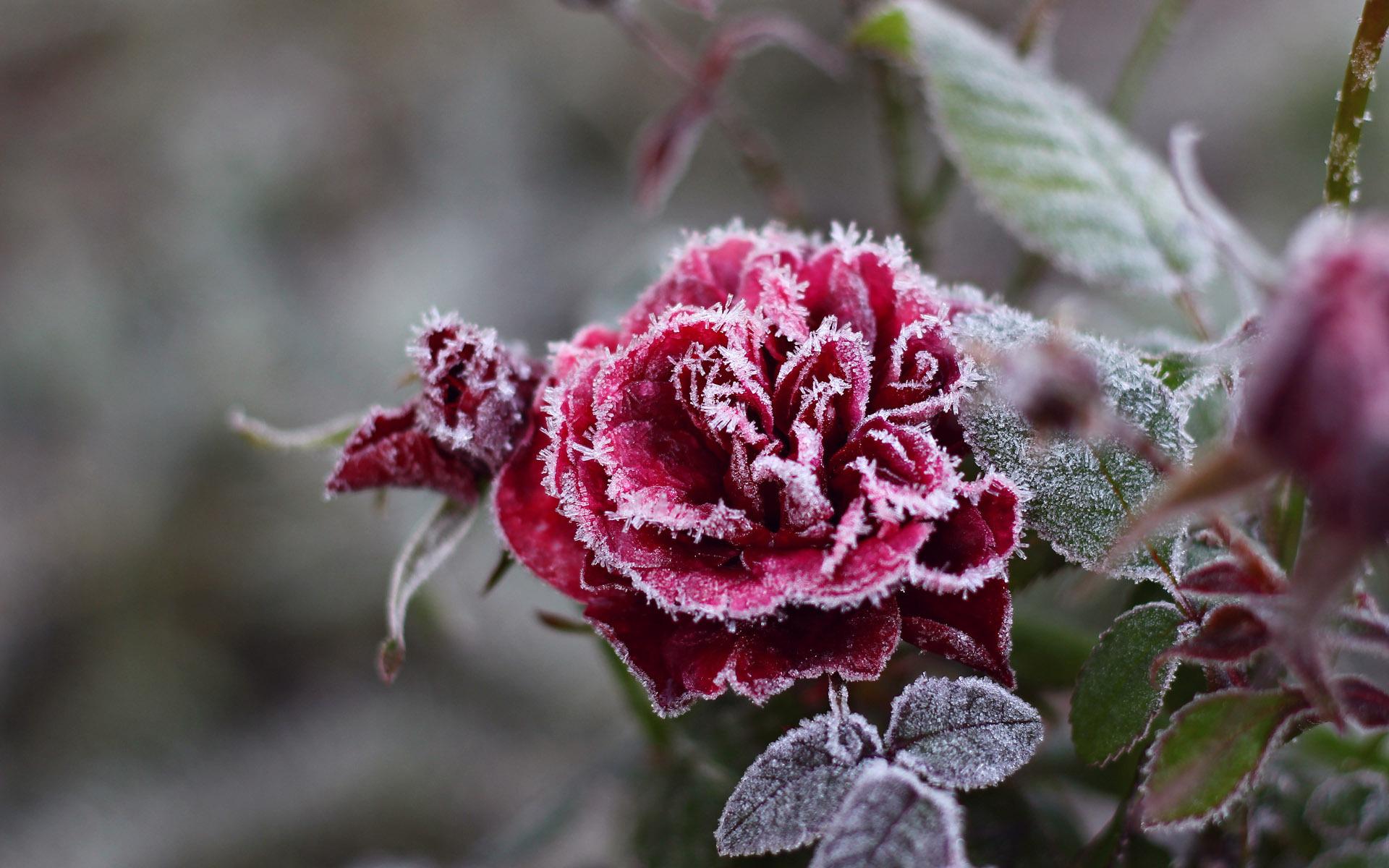 Цветы зимой картинки, доброе утро