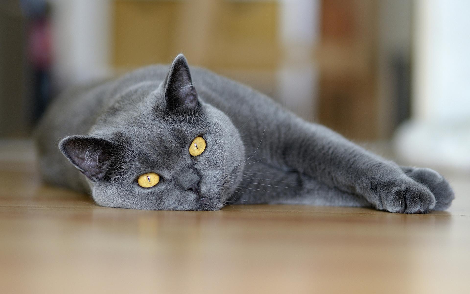 Серенькие кота без смс