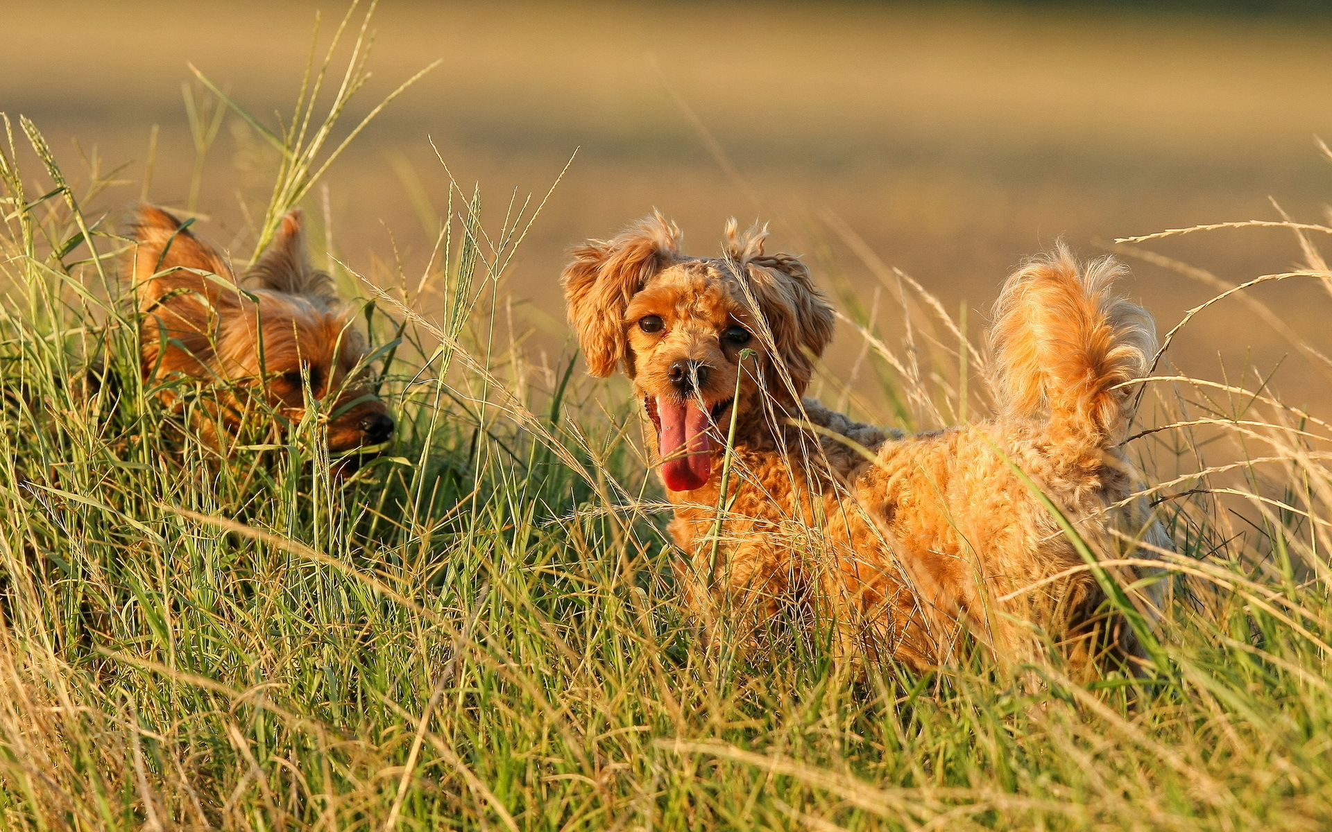собака трава в поле загрузить