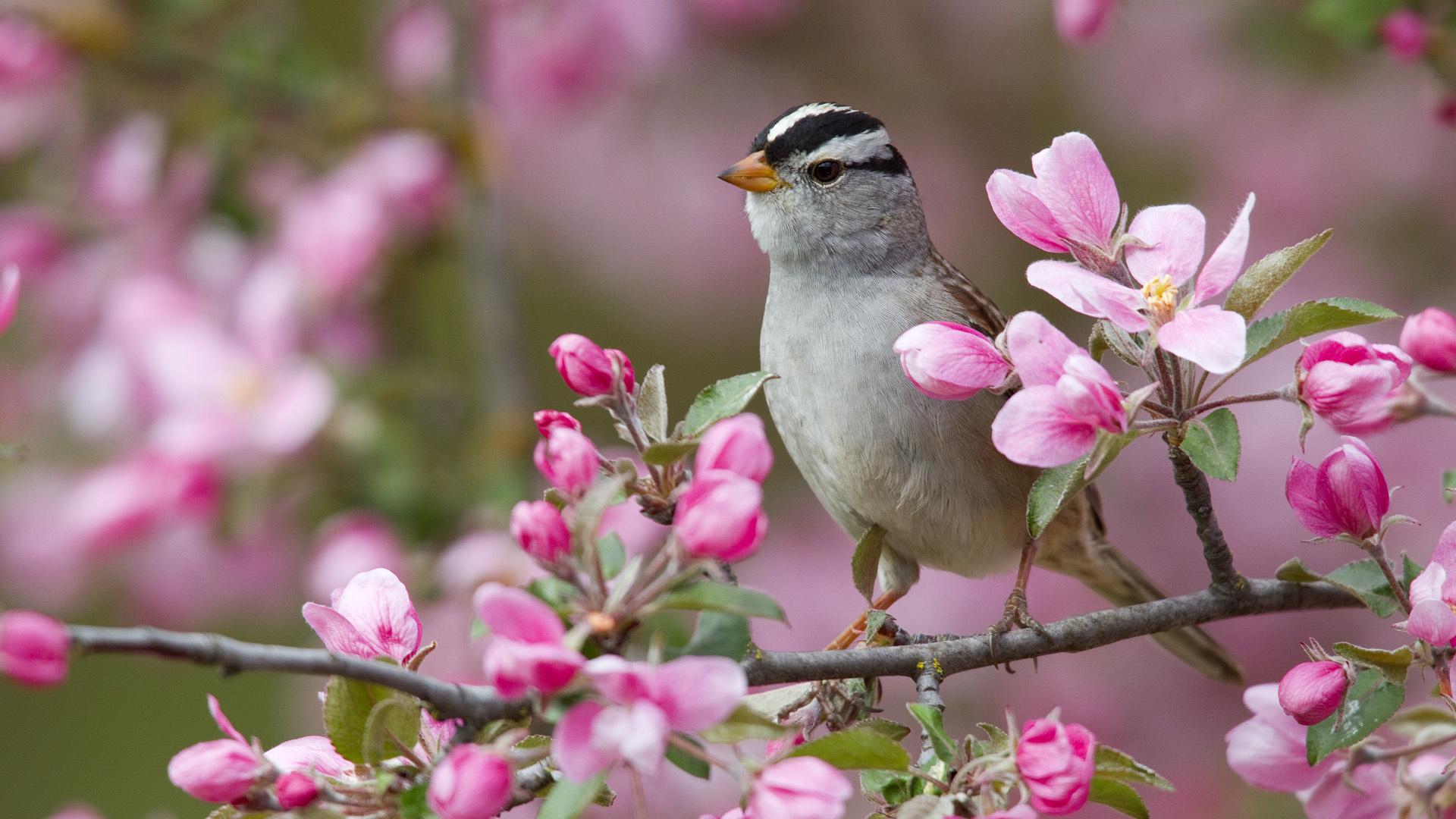 Птицы на ветке  № 1652614  скачать