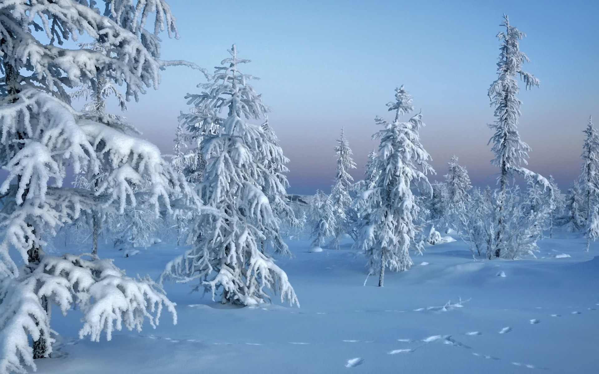 ели снег зима ate snow winter загрузить