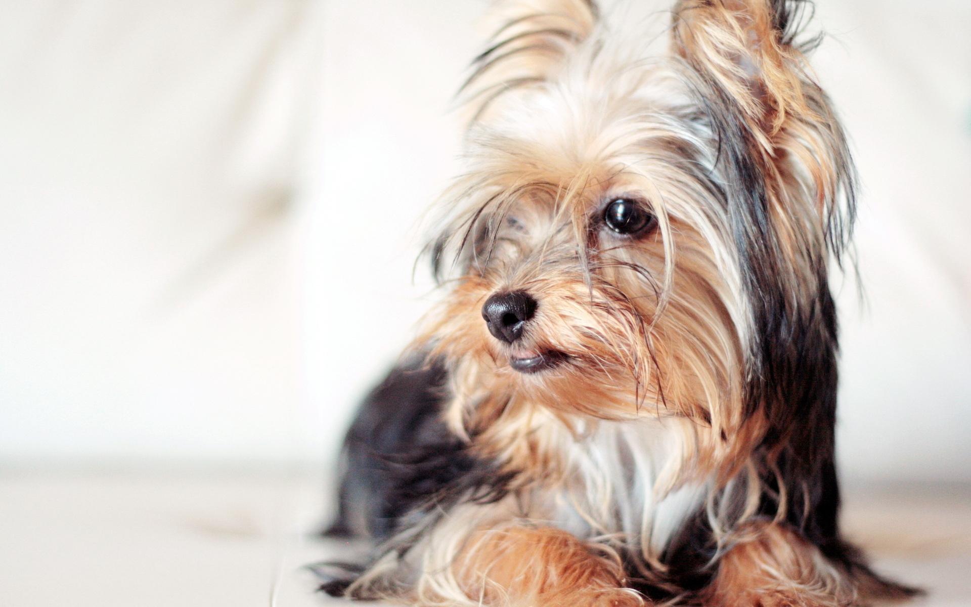 Собачки фото красивые маленький, год