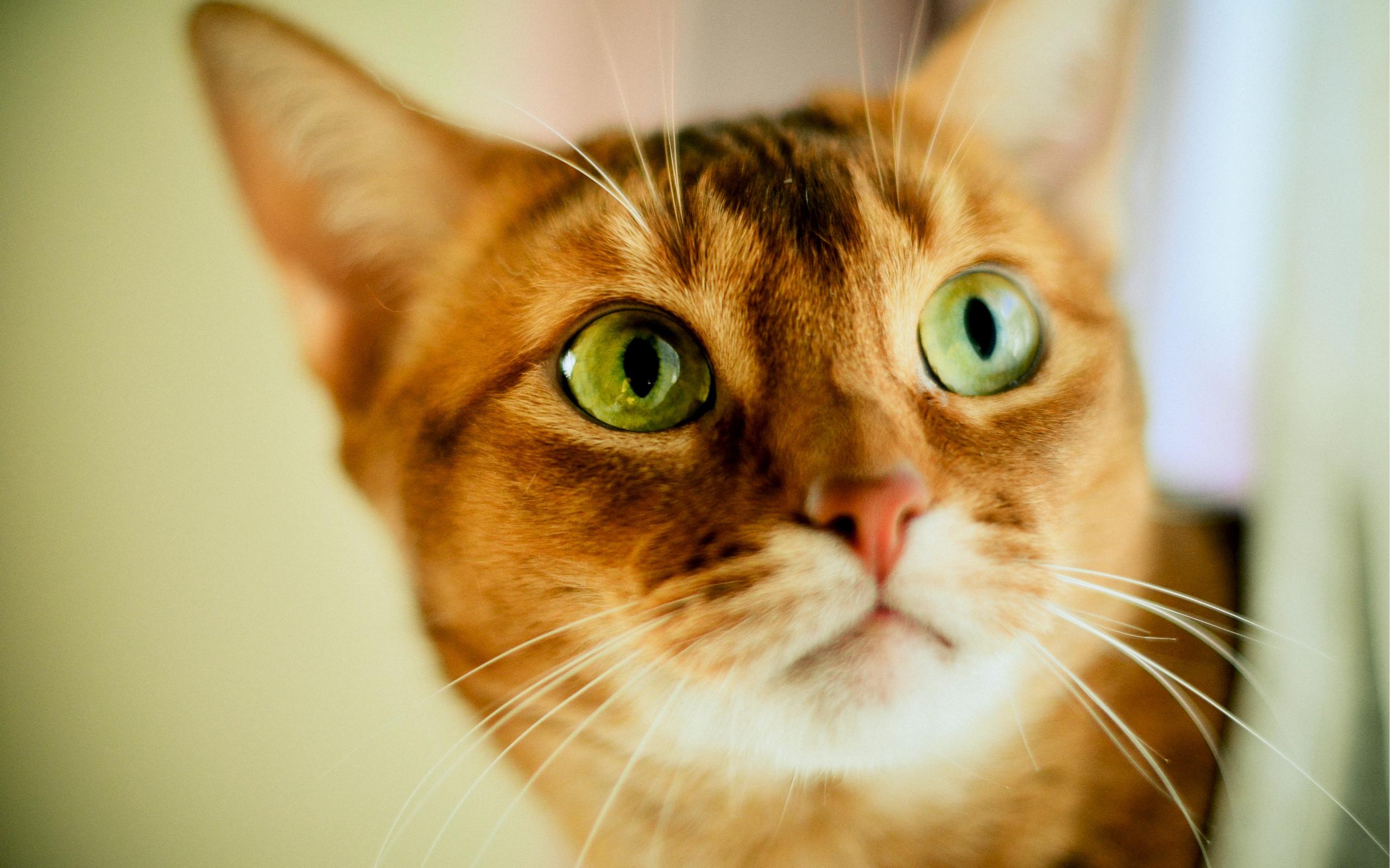 Кошка зеленые глаза без смс