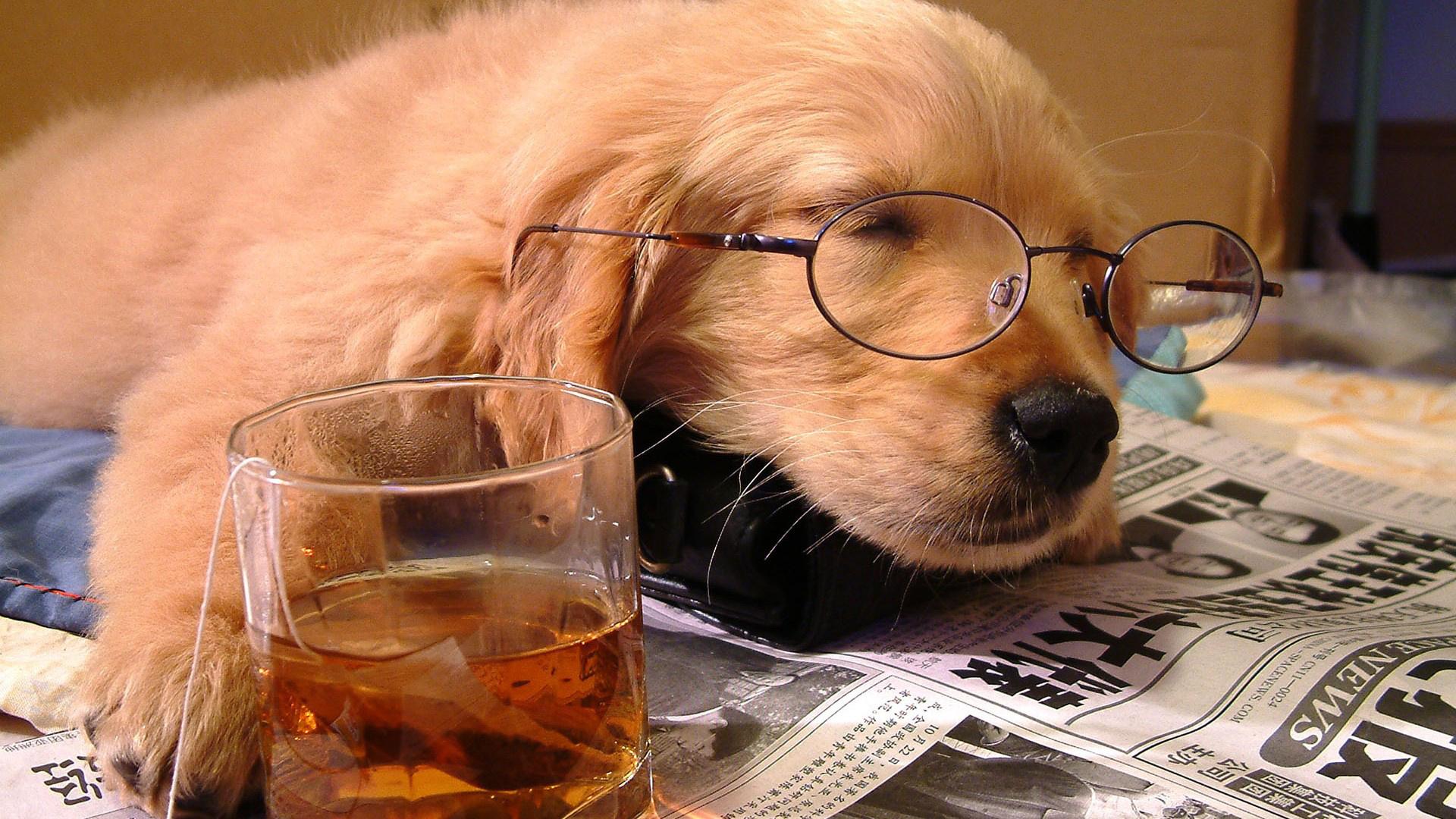 Певец собака юмор очки  № 1527430 загрузить