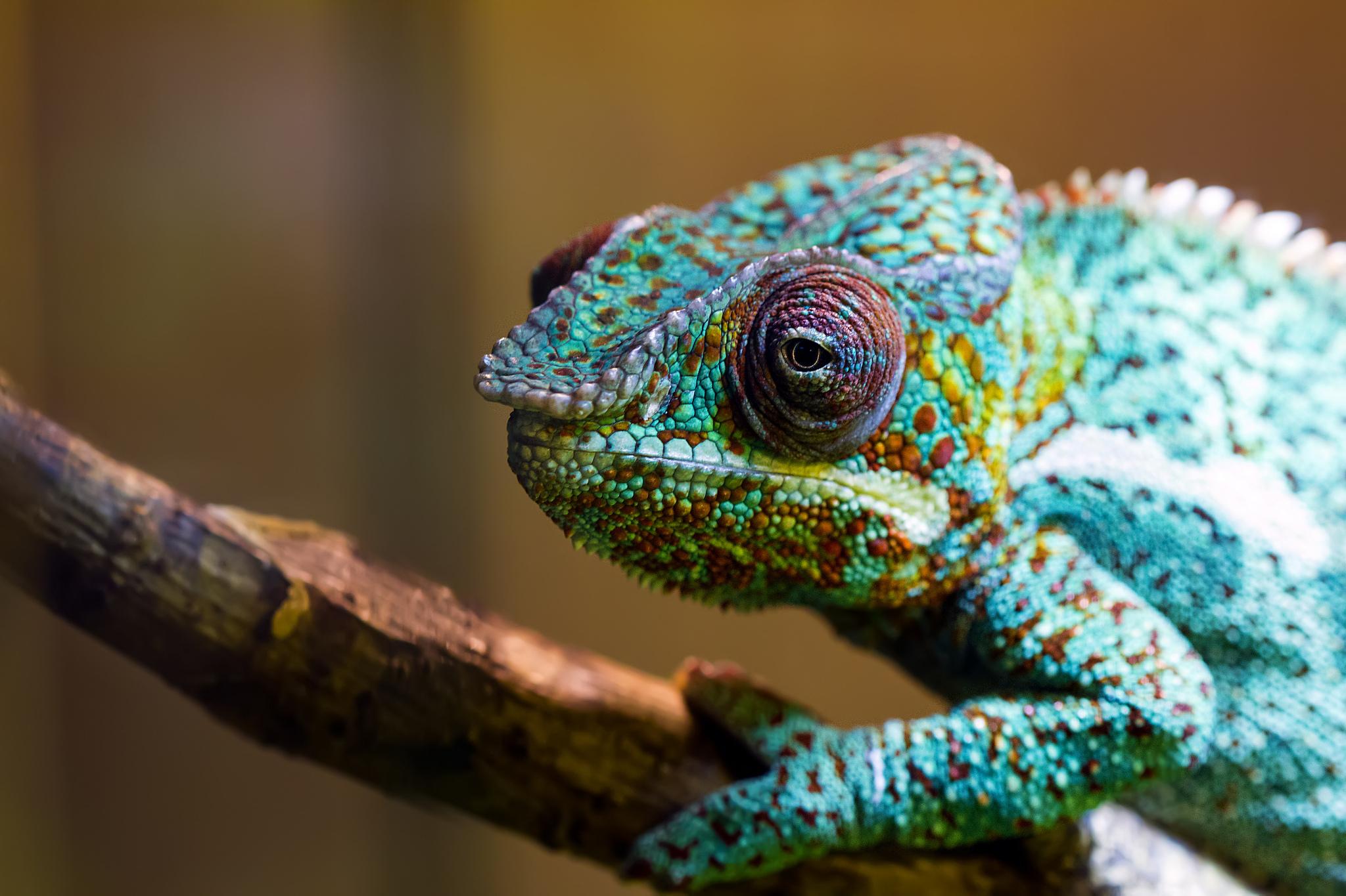зеленая ящерица ствол скачать