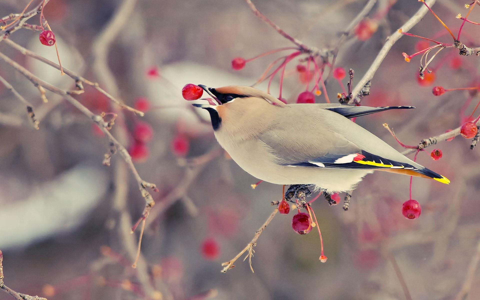птички на снегу  № 101494 без смс