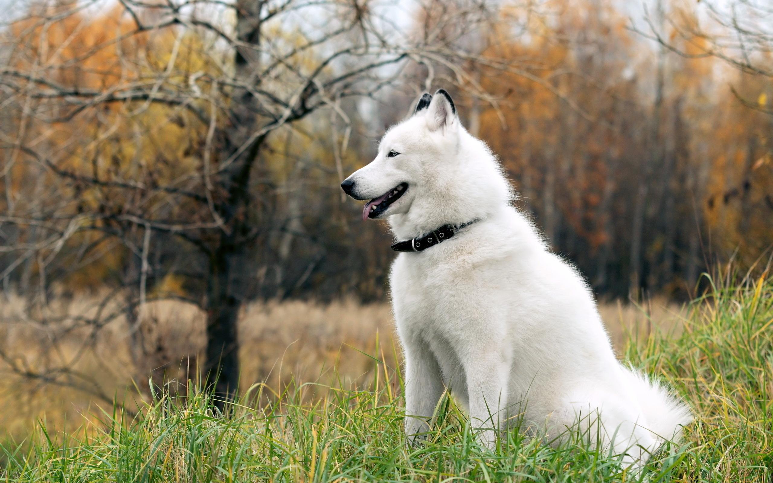 Белый щеночек без смс
