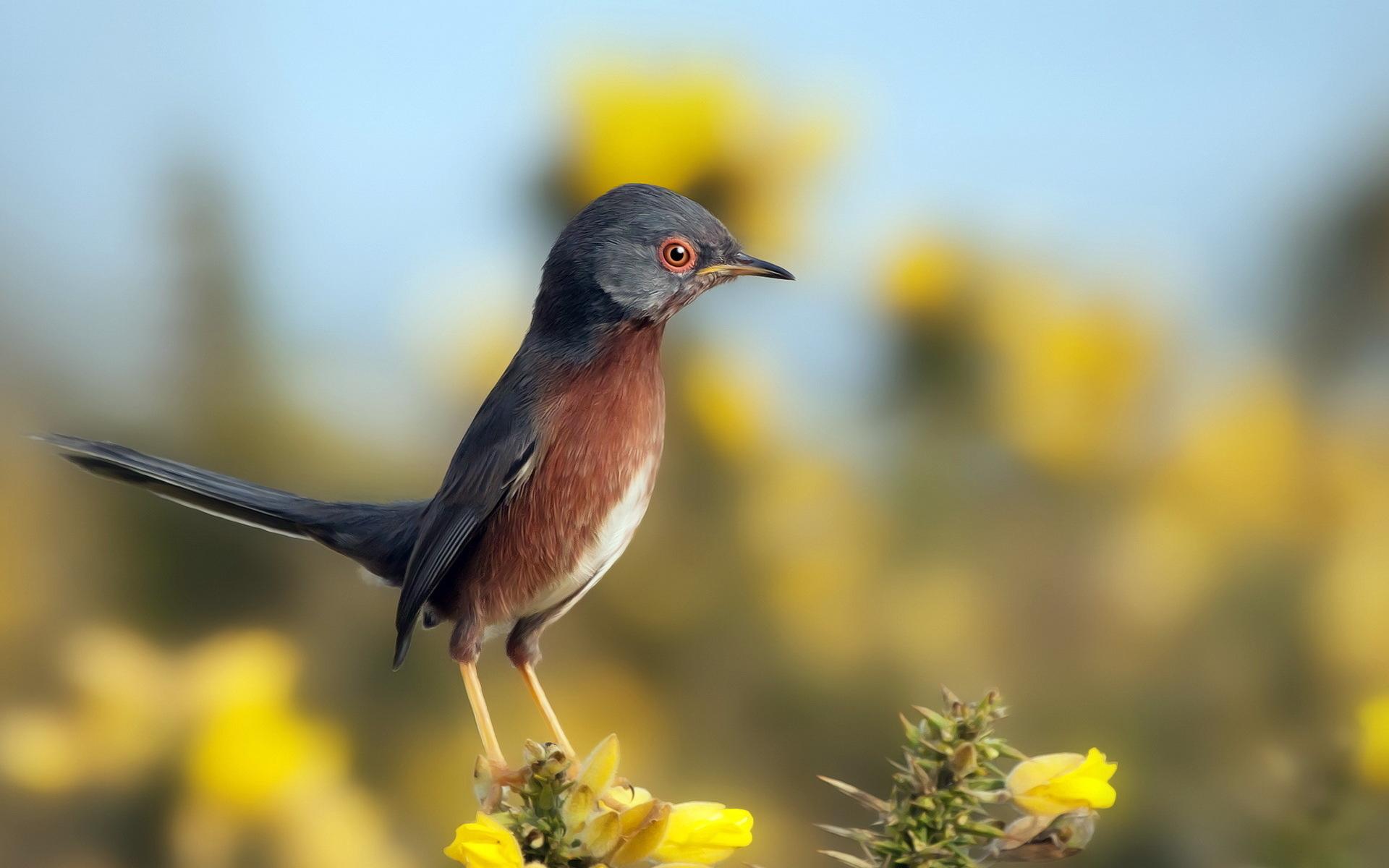 худенькая птичка на лужайке загрузить