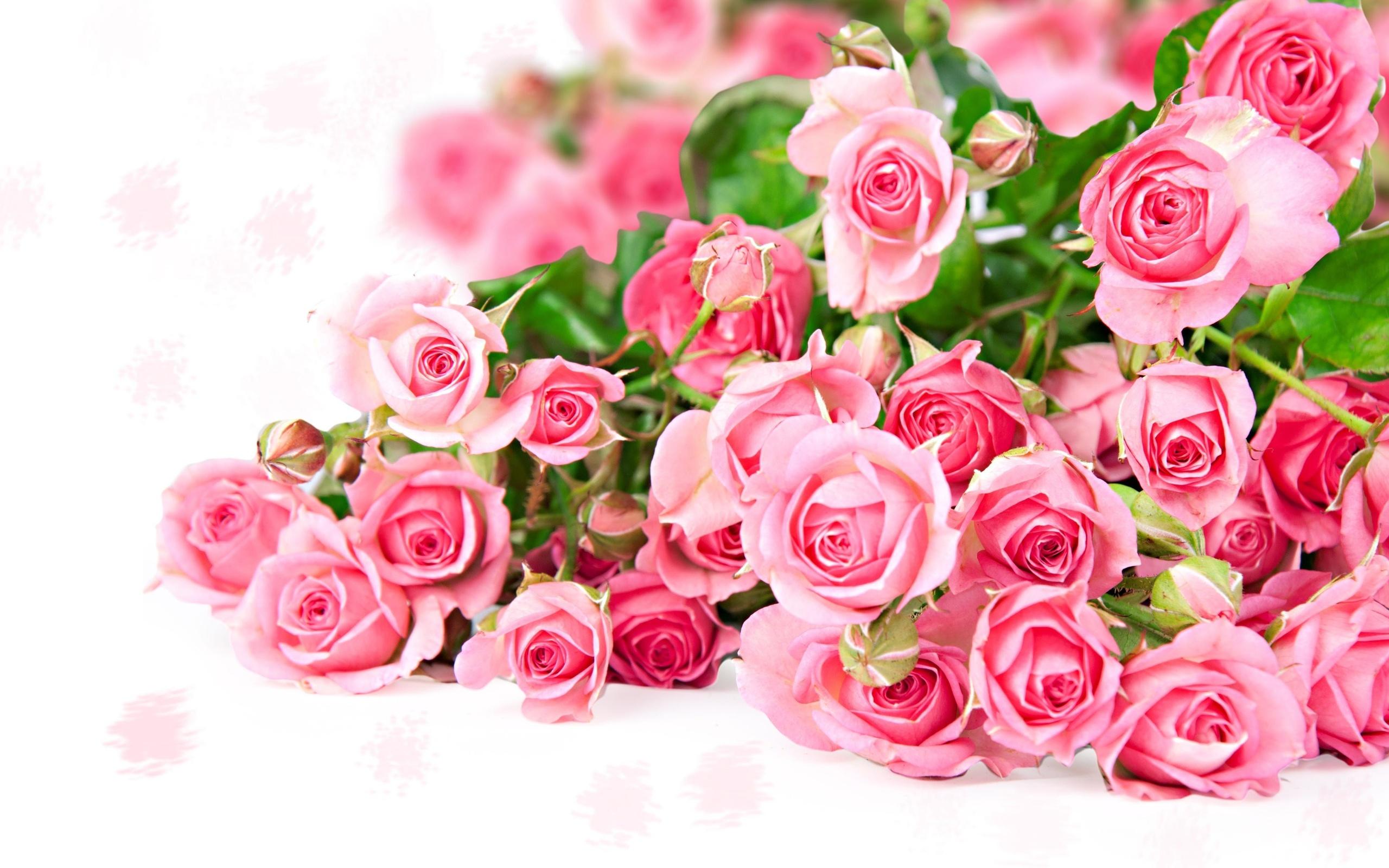 Розовые розы картинка с днем рождения