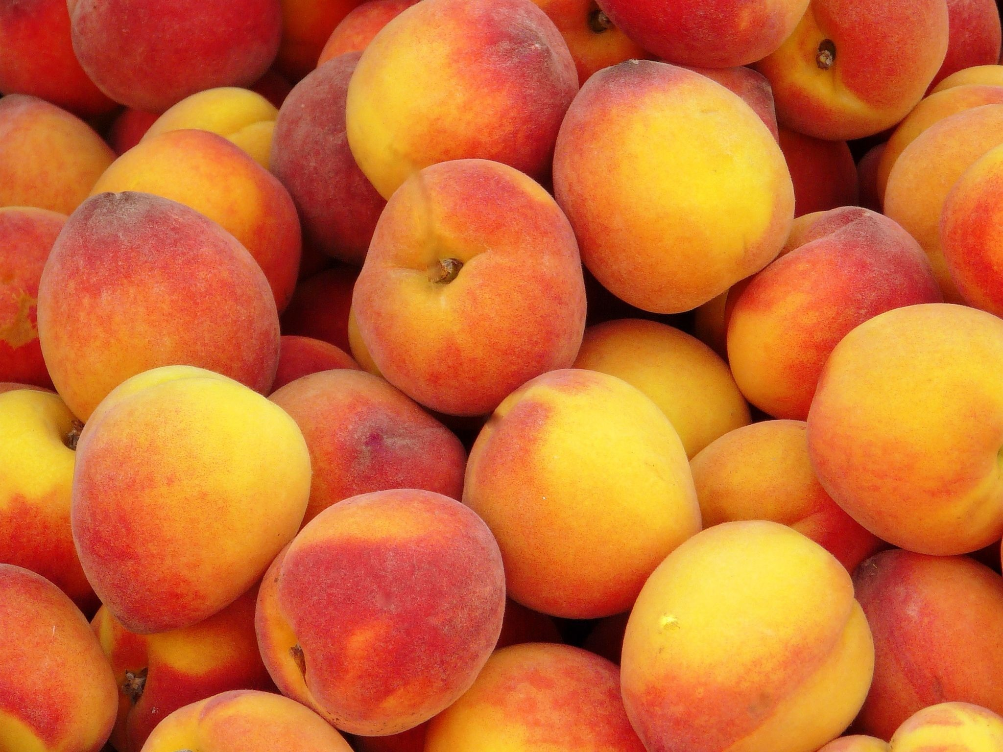 peach fruit The peach (prunus persica) is a deciduous tree native to the region of northwest china between the tarim basin and the north slopes of the kunlun mountains, where it was first domesticated and cultivated.