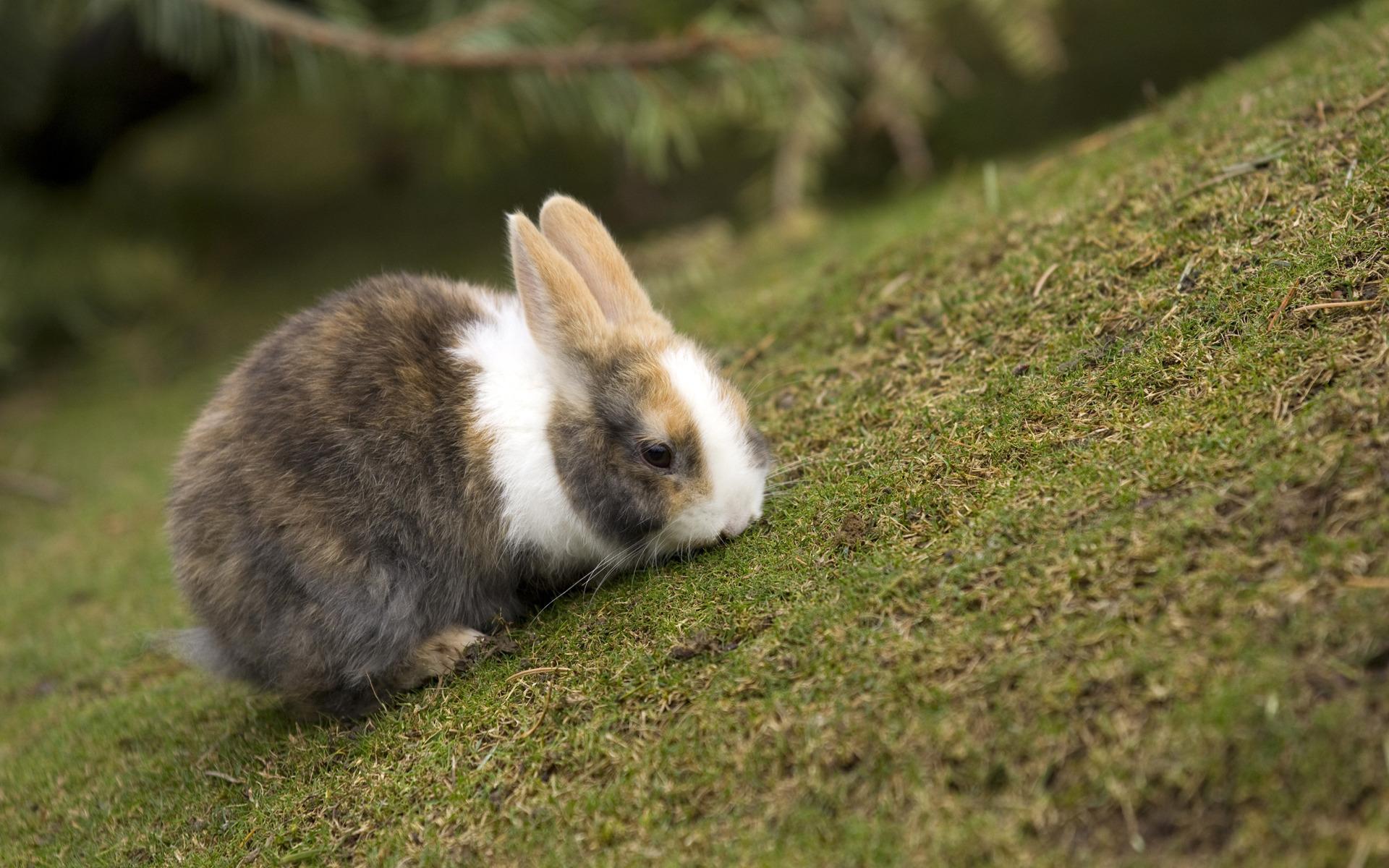 кролик трава  № 1963989 без смс
