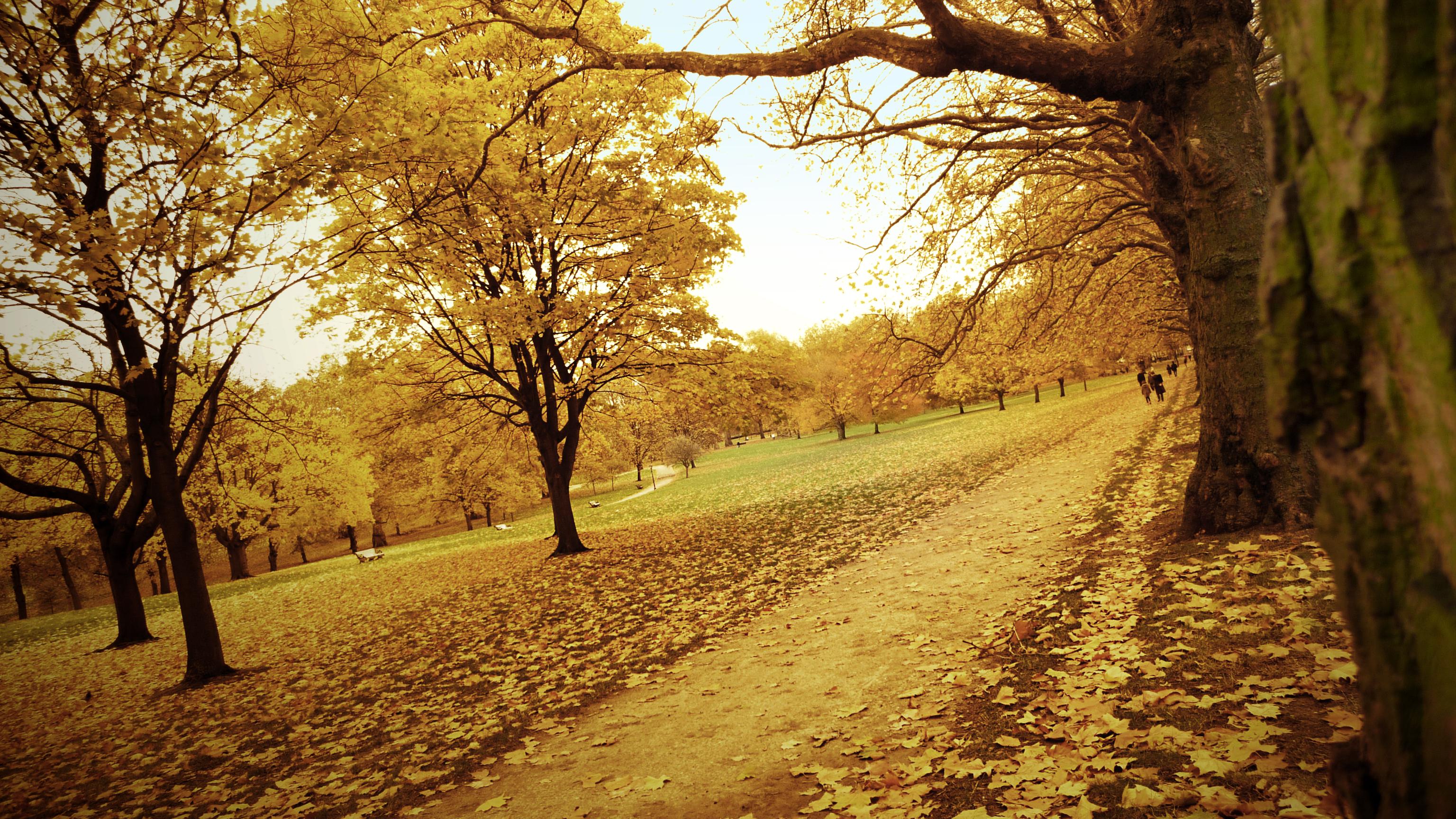 Осення дорожка лесу загрузить