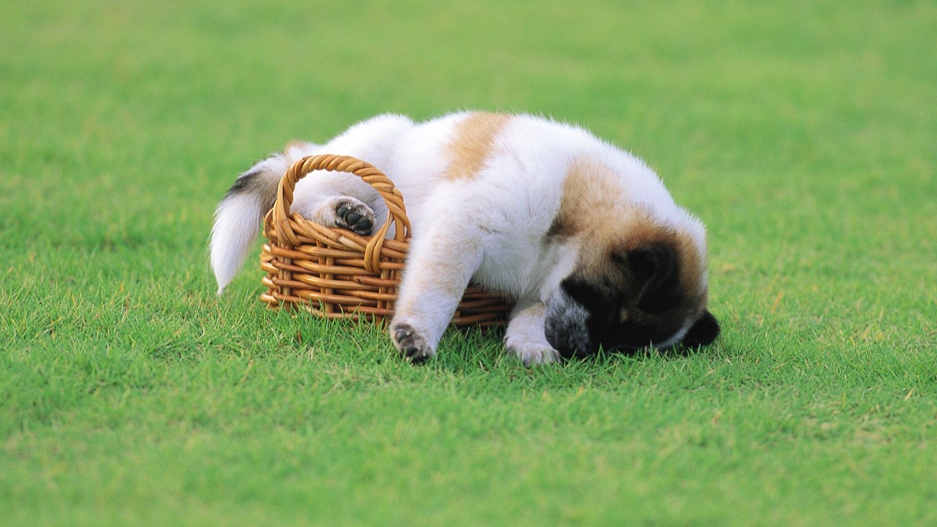 уставшая собачка в хорошем качестве