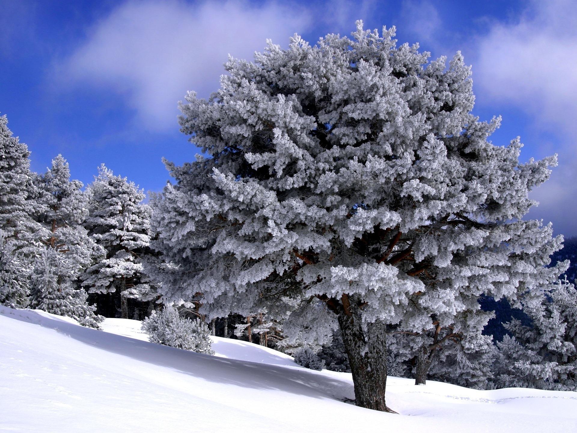 природа зима деревья скачать