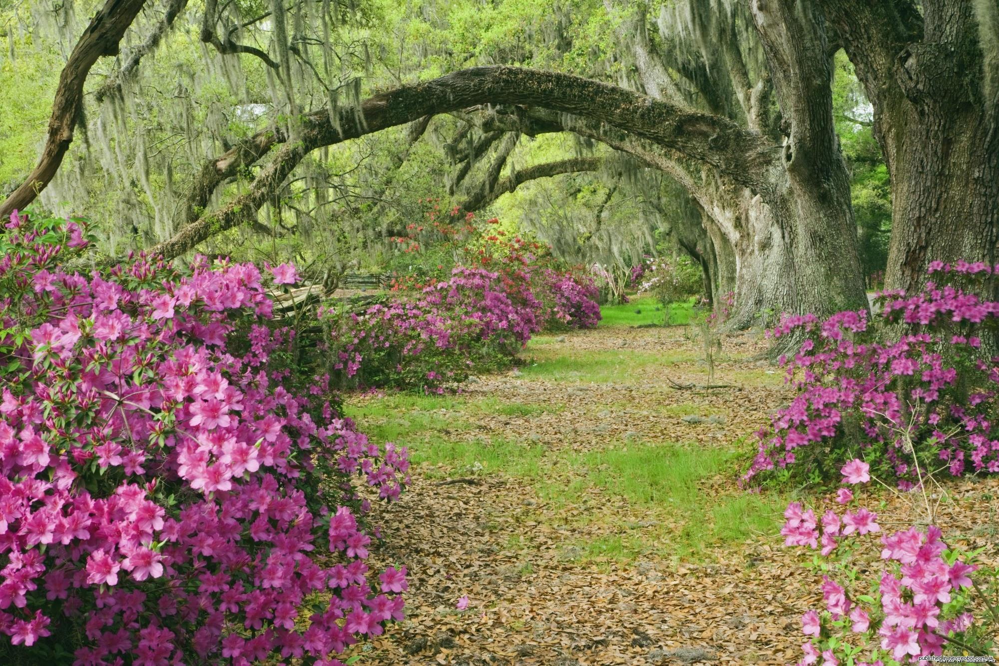 цветущие деревья во дворе  № 532070 бесплатно