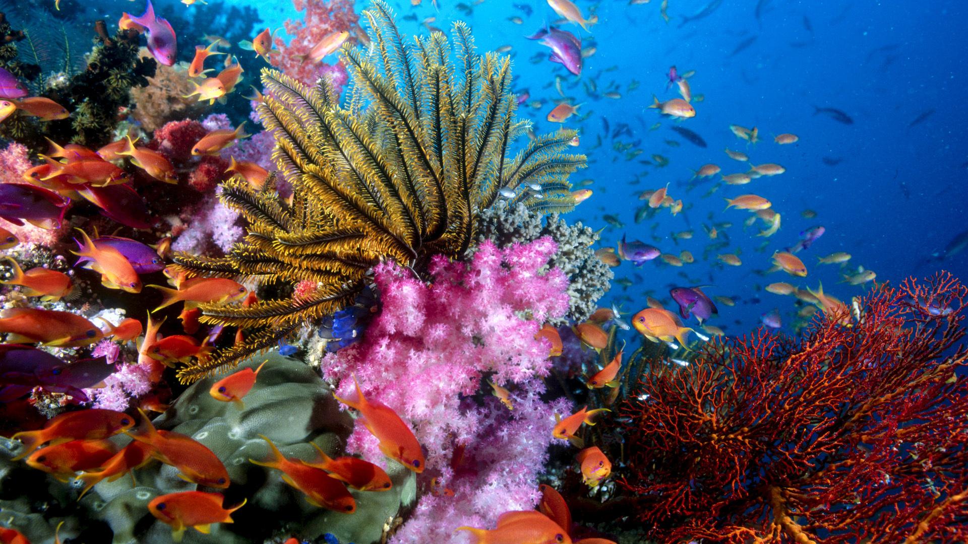 Обои рыбы риф подводный мир океан