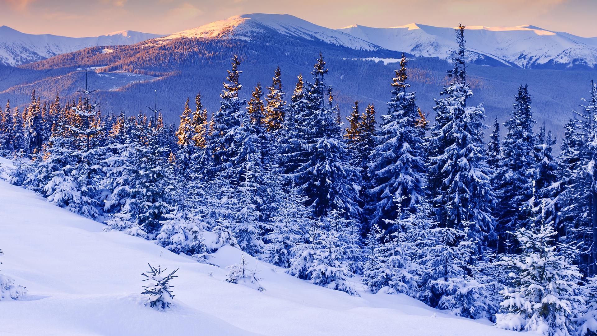 снег зима закат ели загрузить