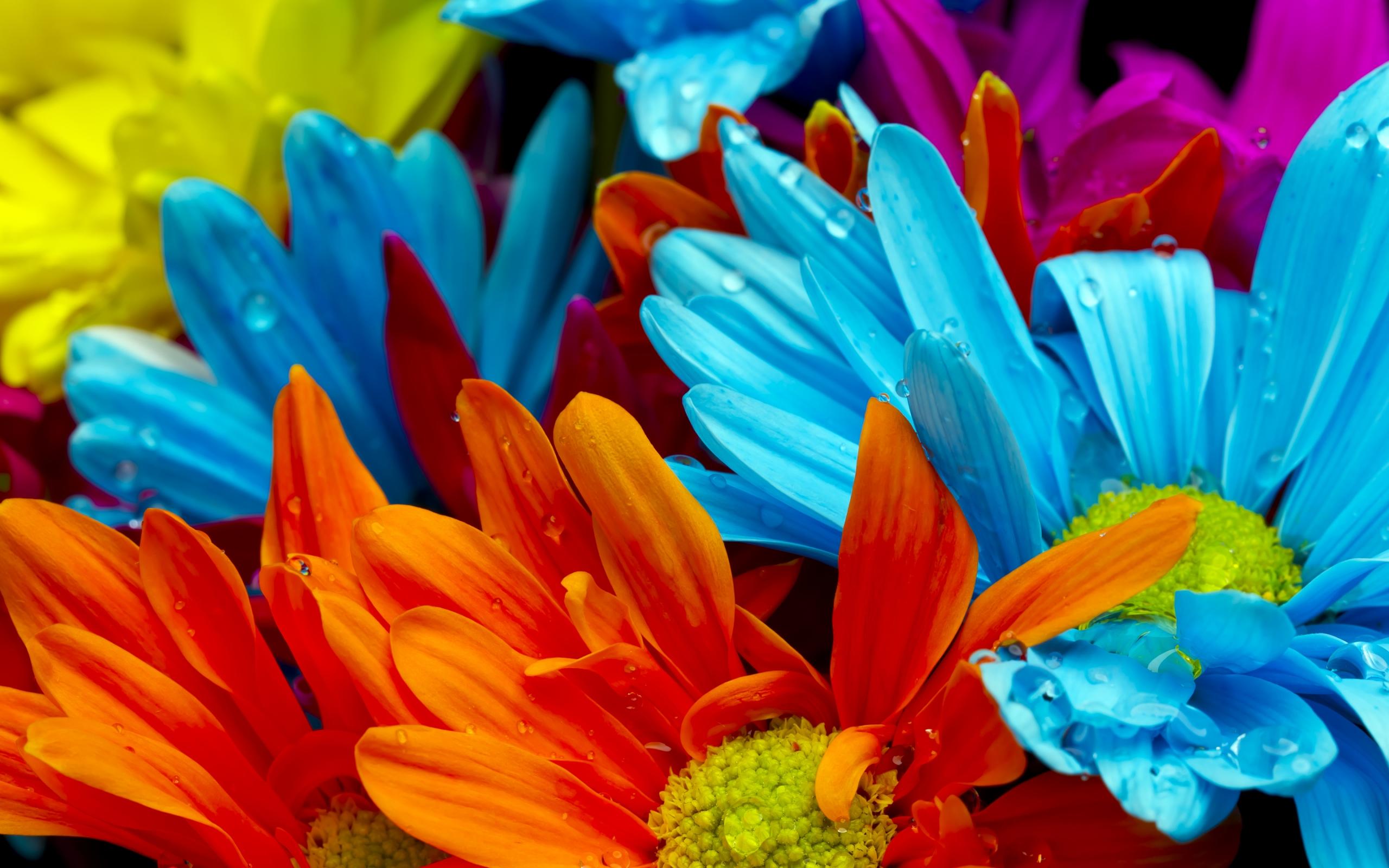 Картинки на телефон красивые цветы красочные, картинки женщине
