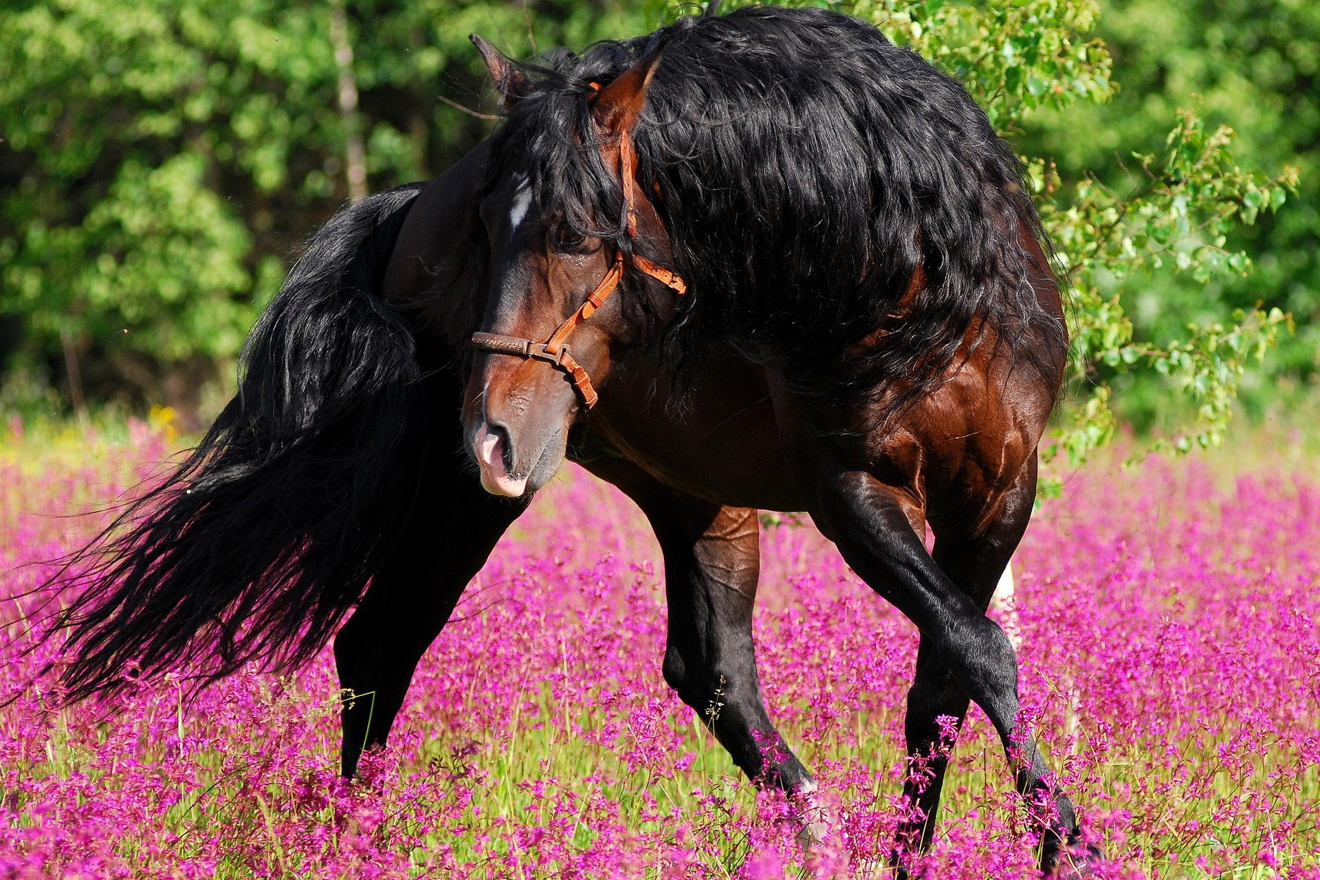 лошадь лицо животное природа без смс