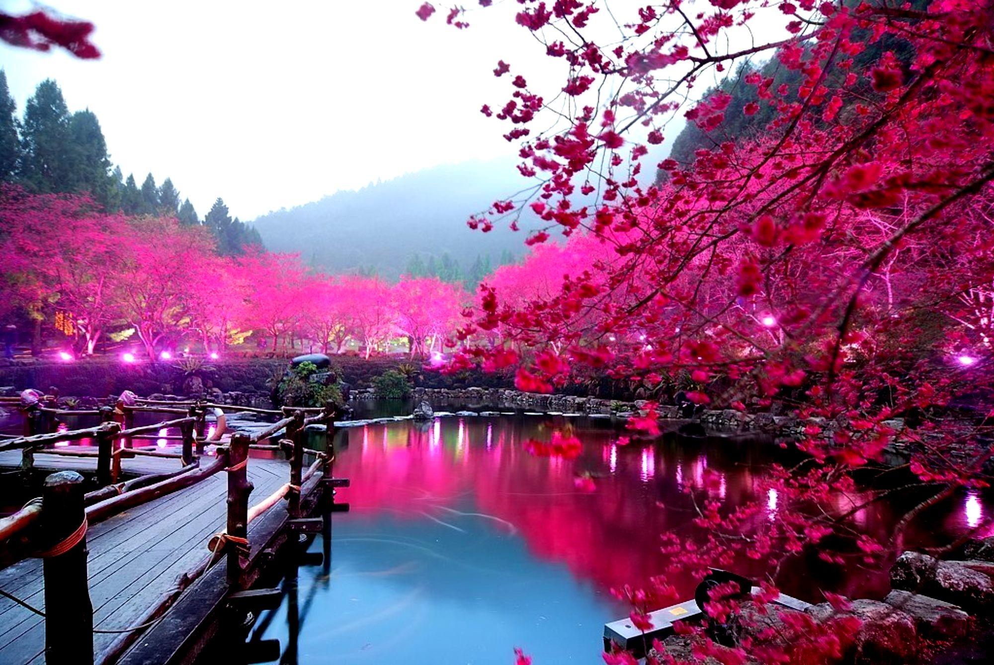 Деревья цветы весна обои раздела