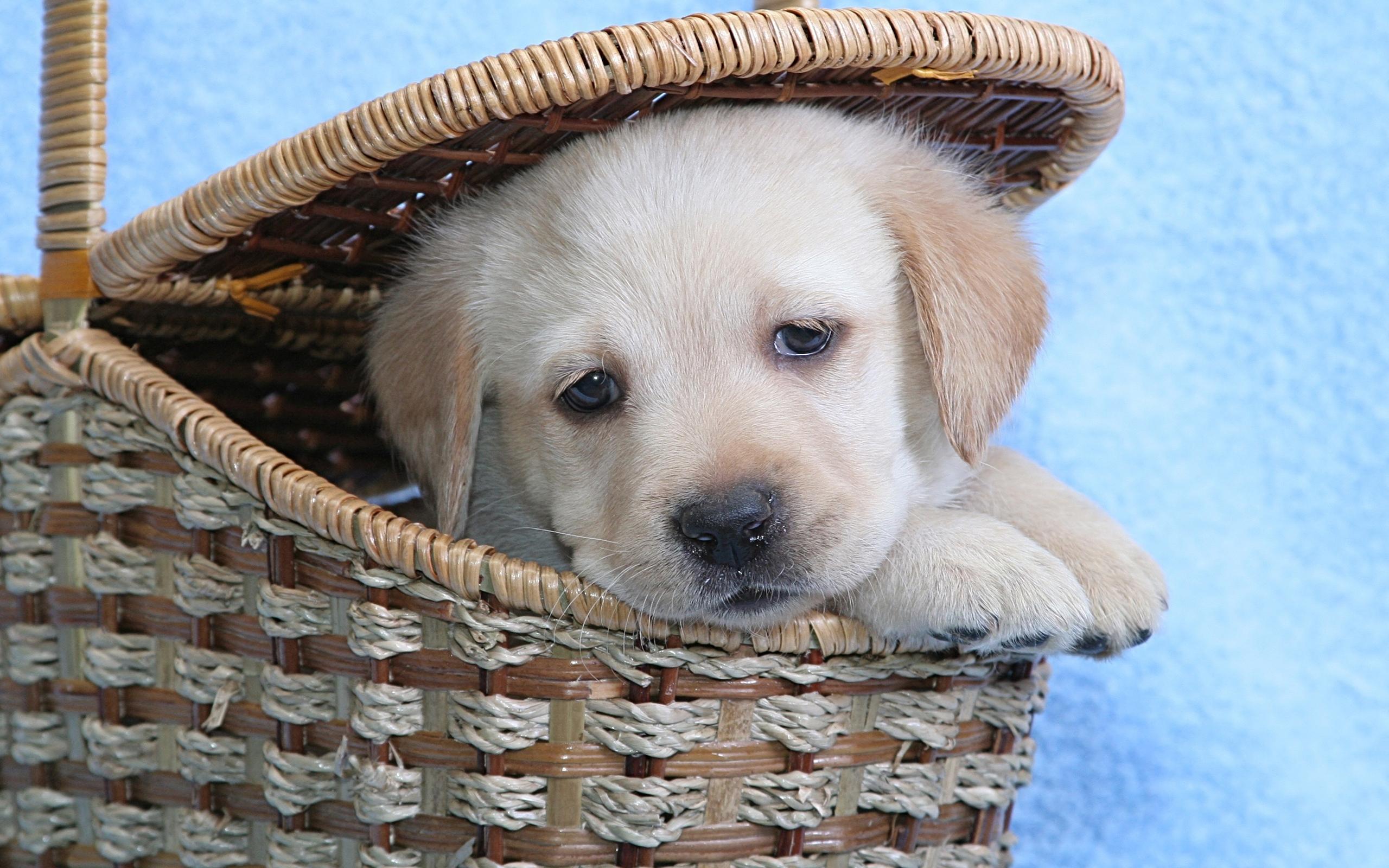 милые собаки  № 688137  скачать