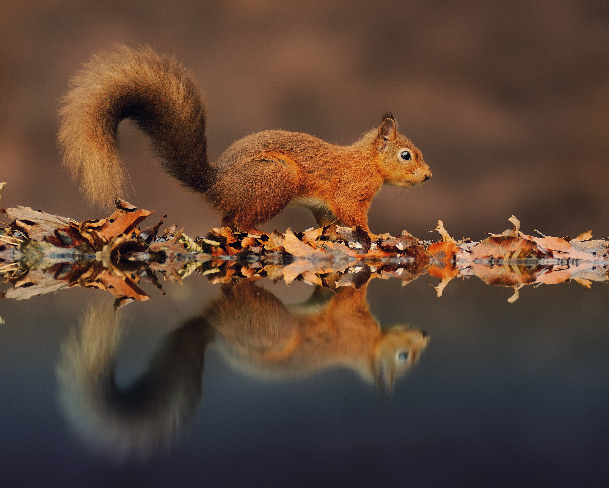 природа животные кролик листья осень деревья  № 2035300 бесплатно