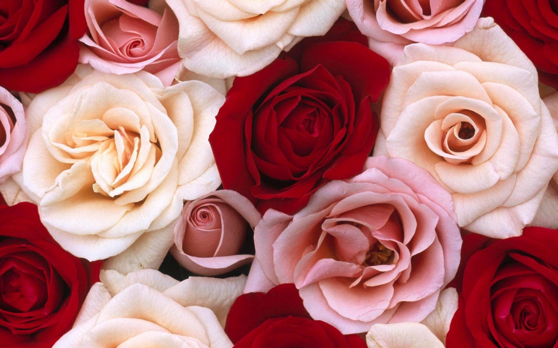 Самые красивые обои розы на рабочий стол скачать бесплатно