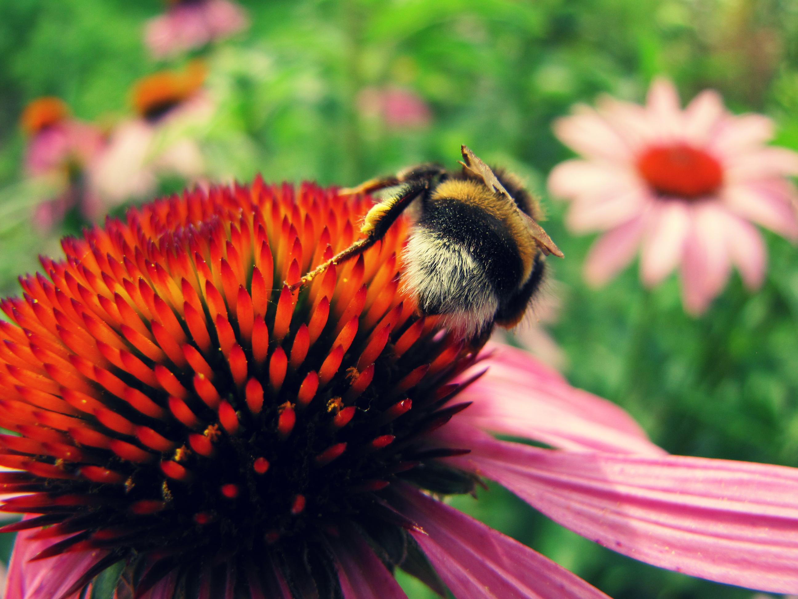 насекомое цветок загрузить