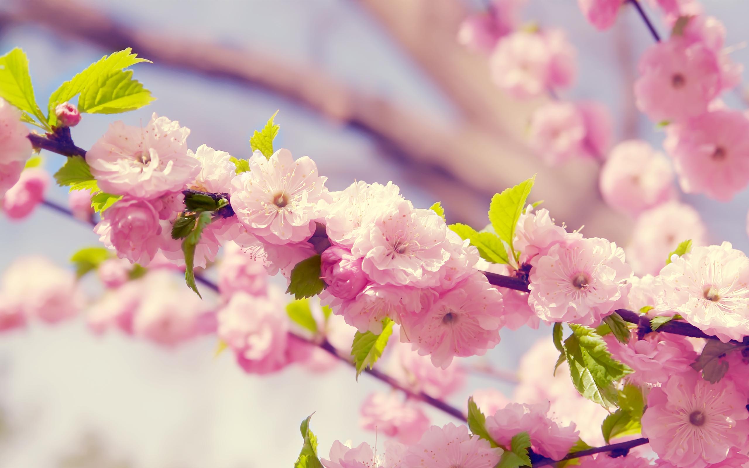 Распустившийся цветок бесплатно