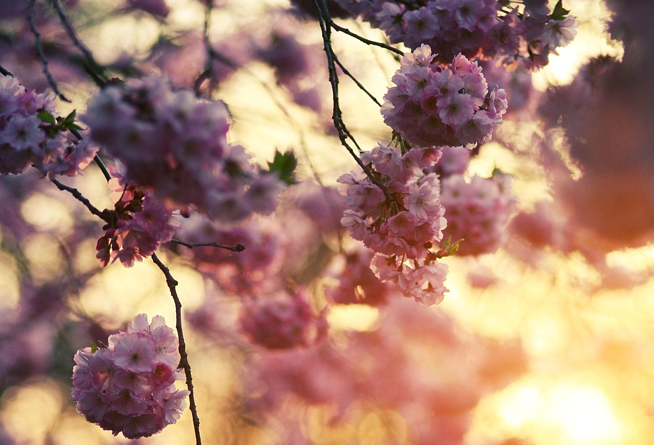 Опавшие лепестки цветения  № 3170372  скачать