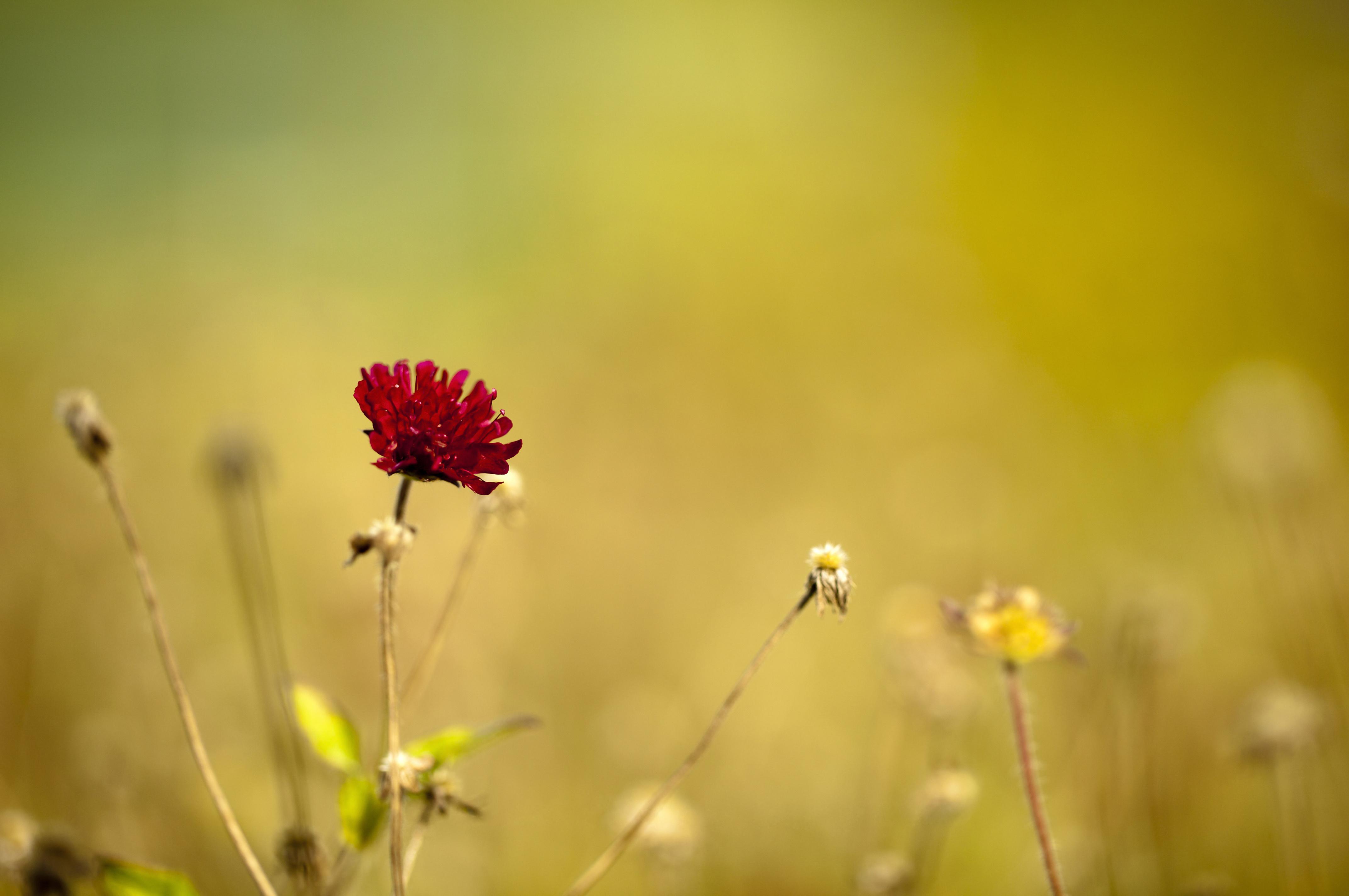 природа красный цветок макро без смс