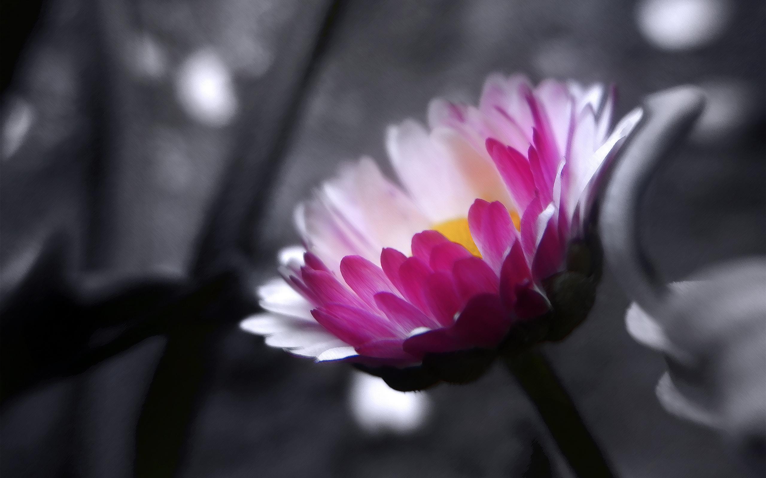 Фото бело розовых цветов