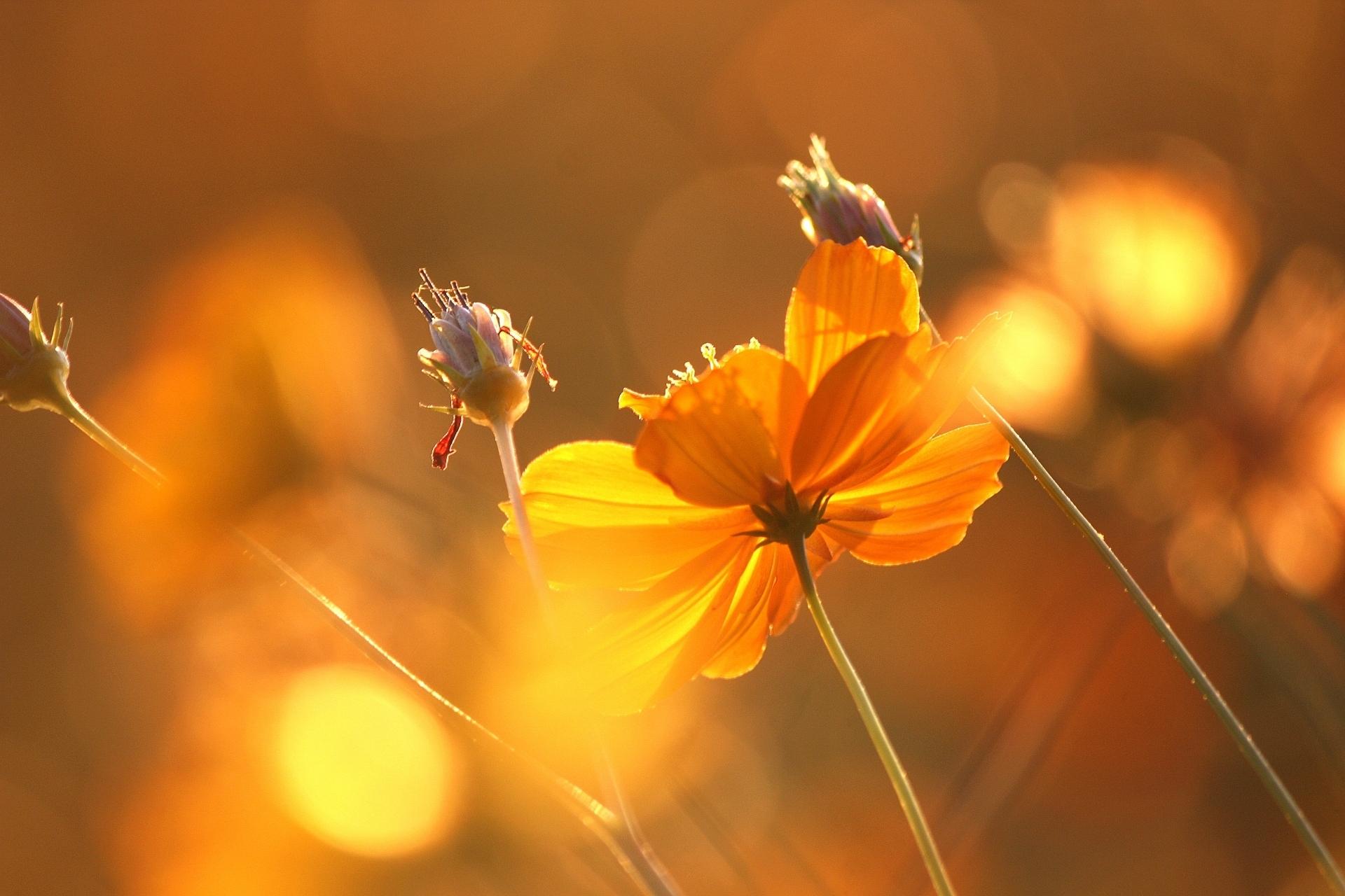 цветы на закате загрузить