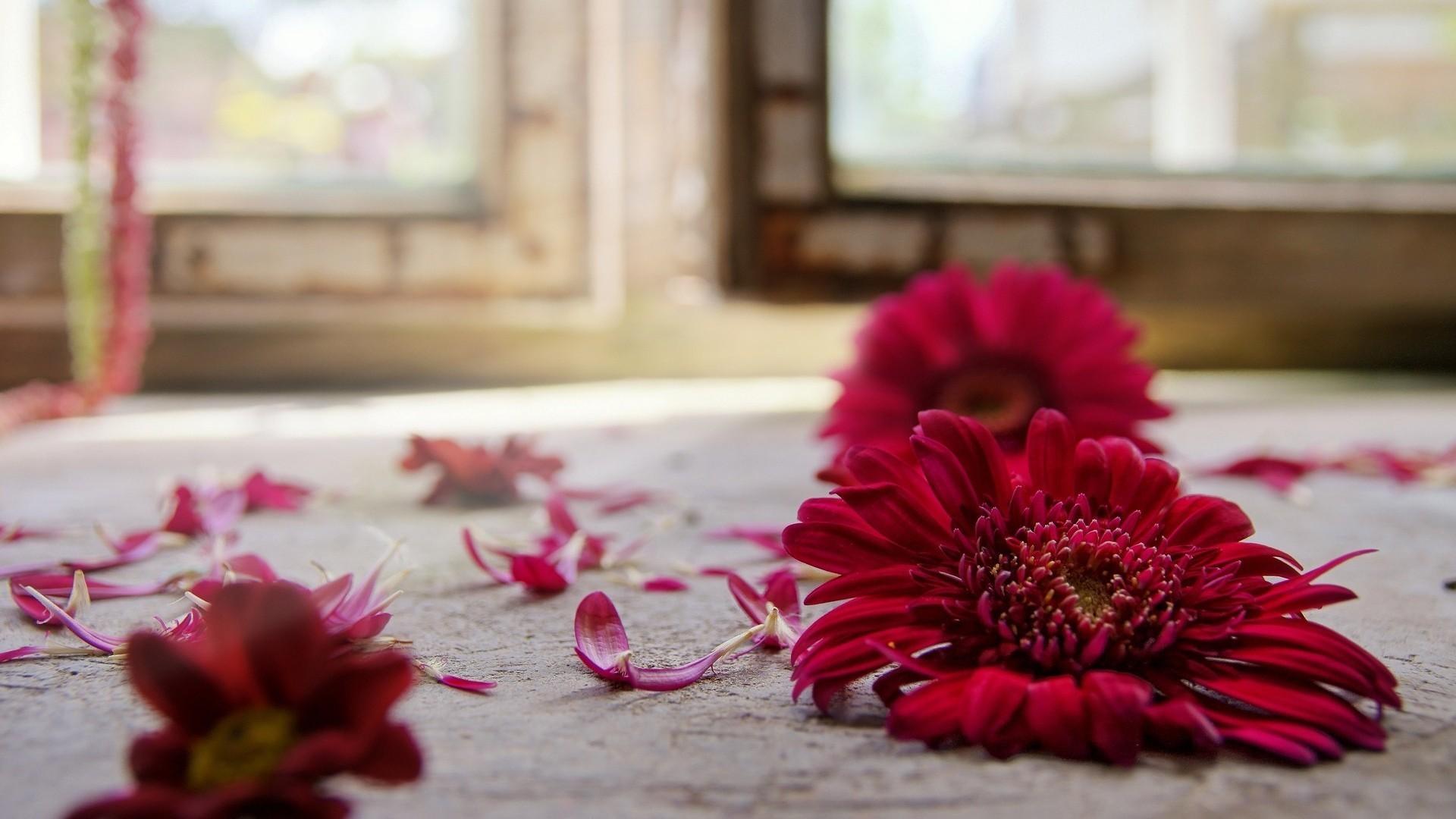 цветы, красные, лепестки анонимно