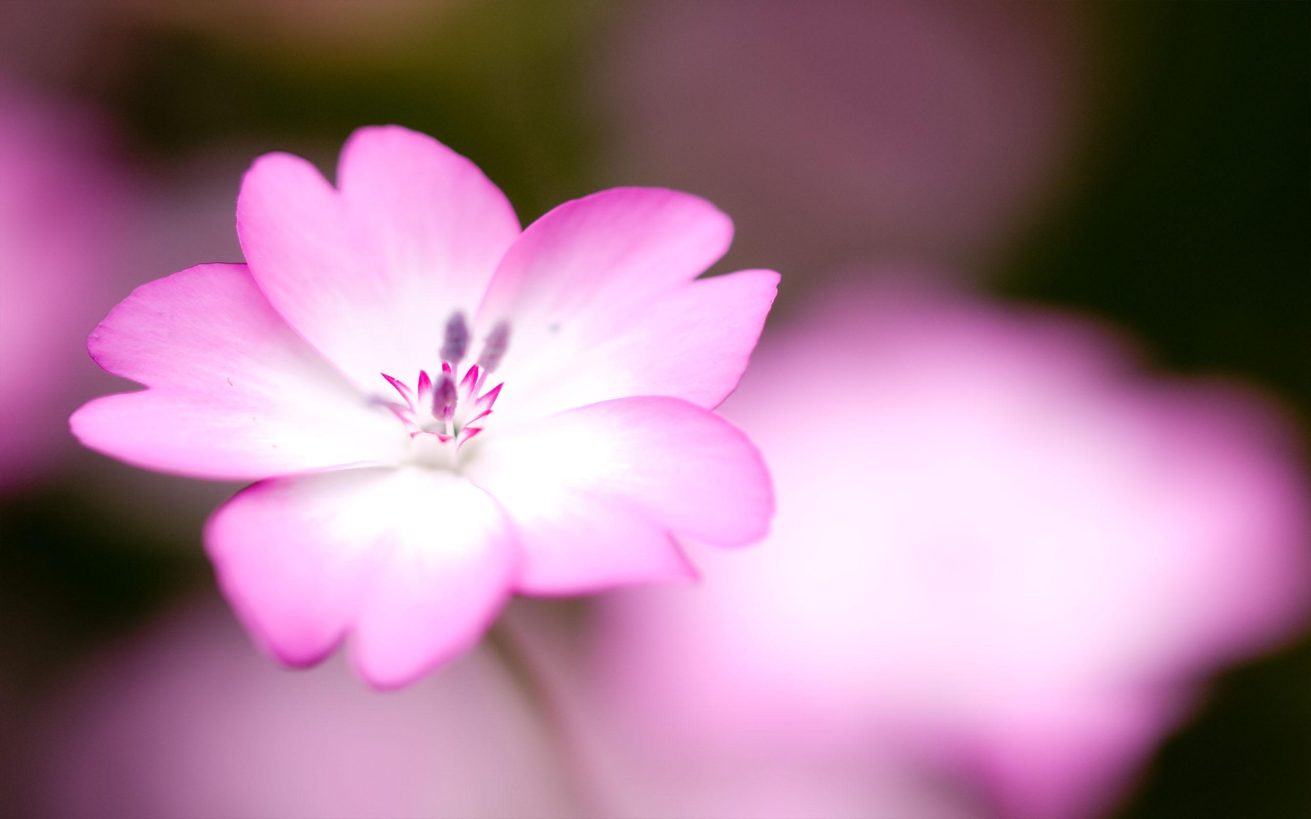 цветок розовый загрузить