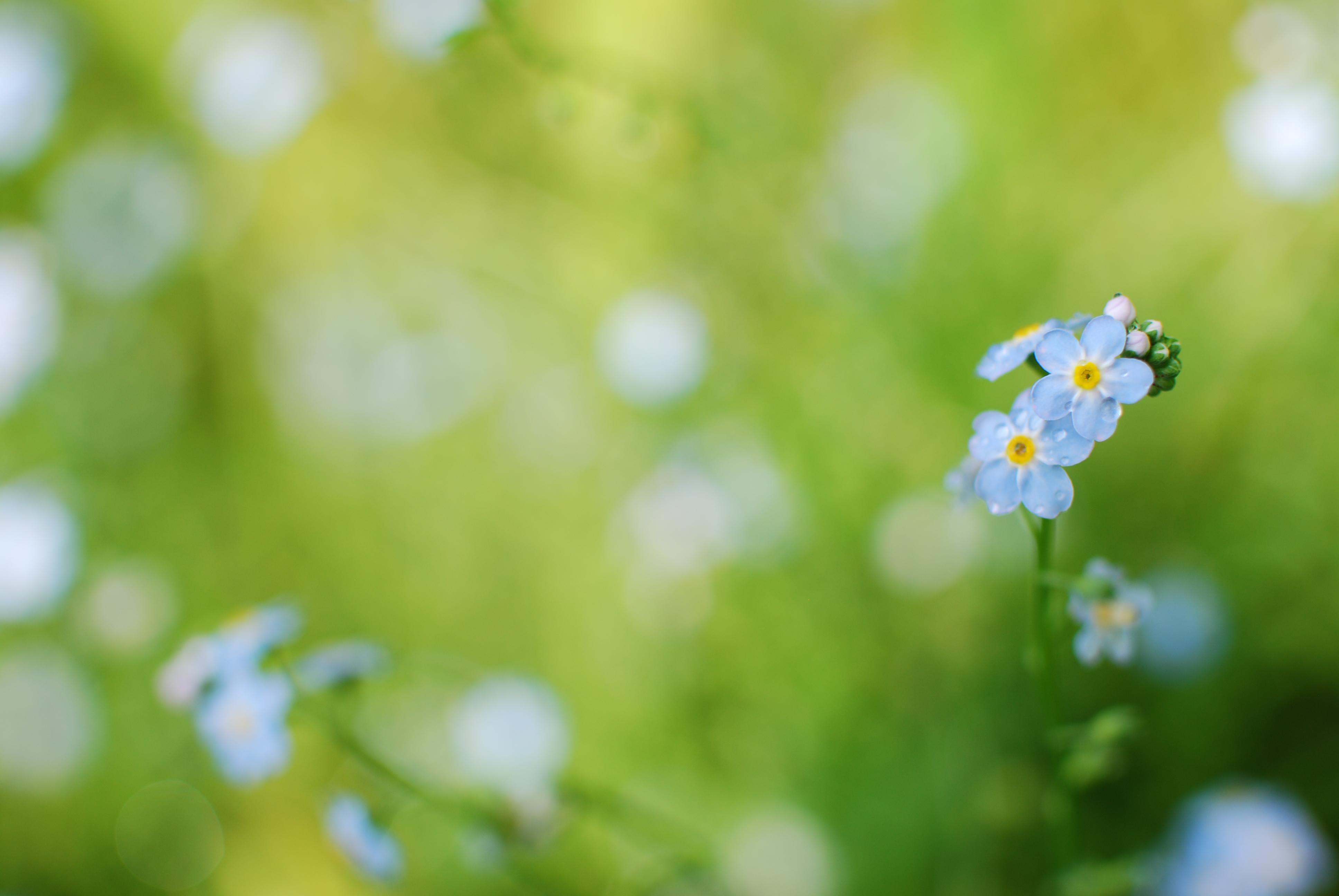 Цветок капли размытость бесплатно
