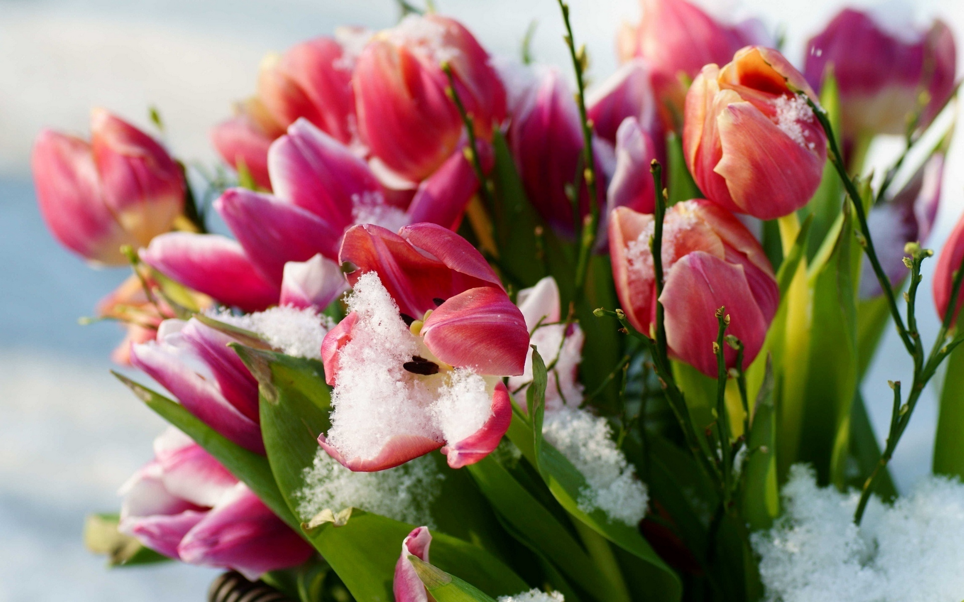 открытка весенние цветы фото