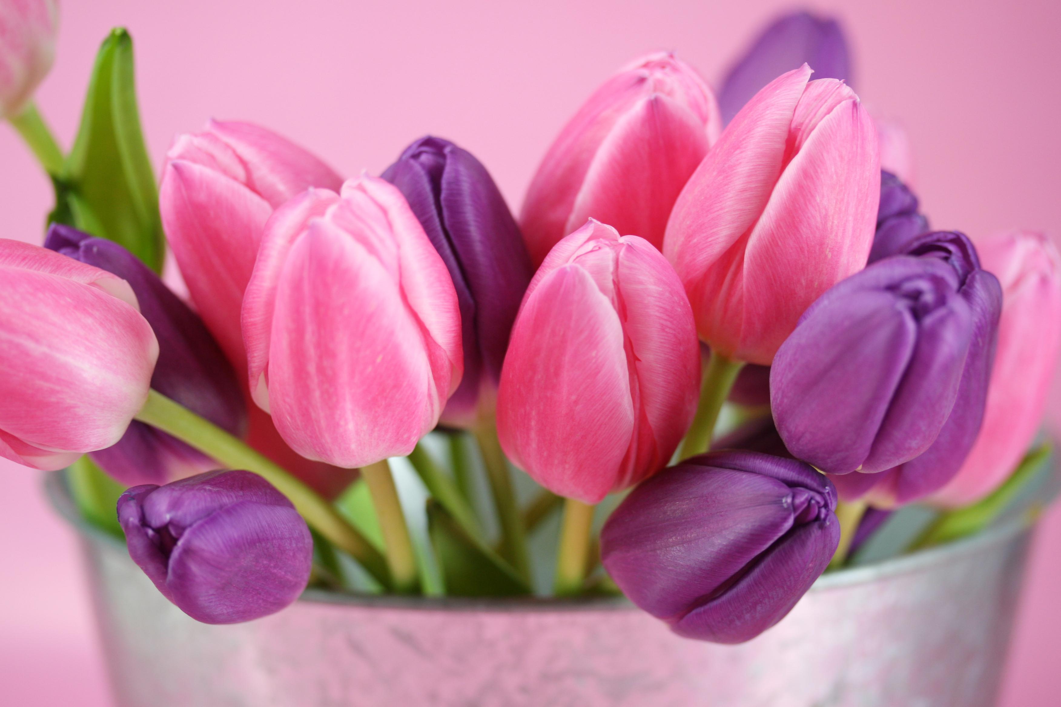 Тюльпаны букет фото картинки высокого качества
