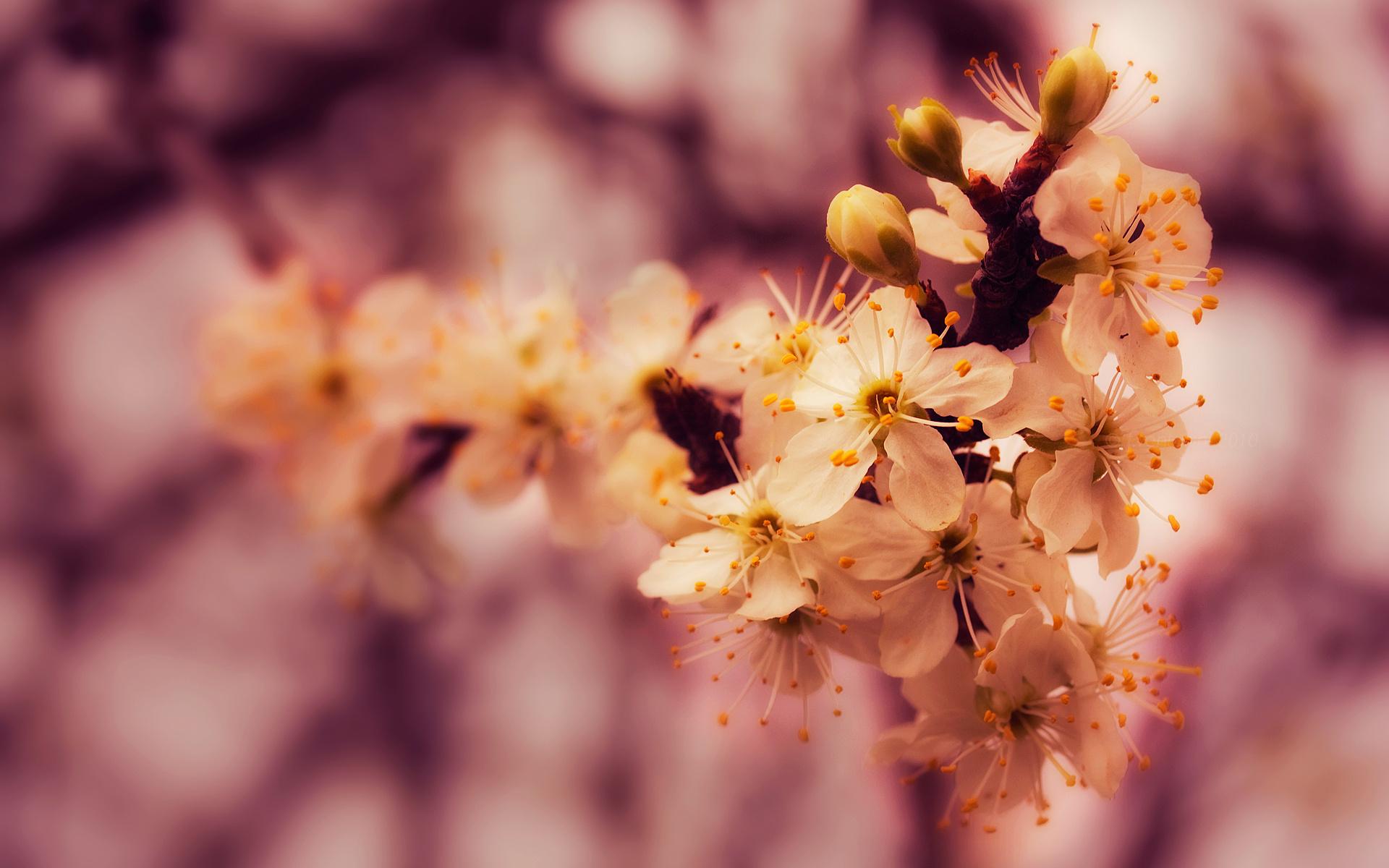 Открытки с добрым утром природа весна